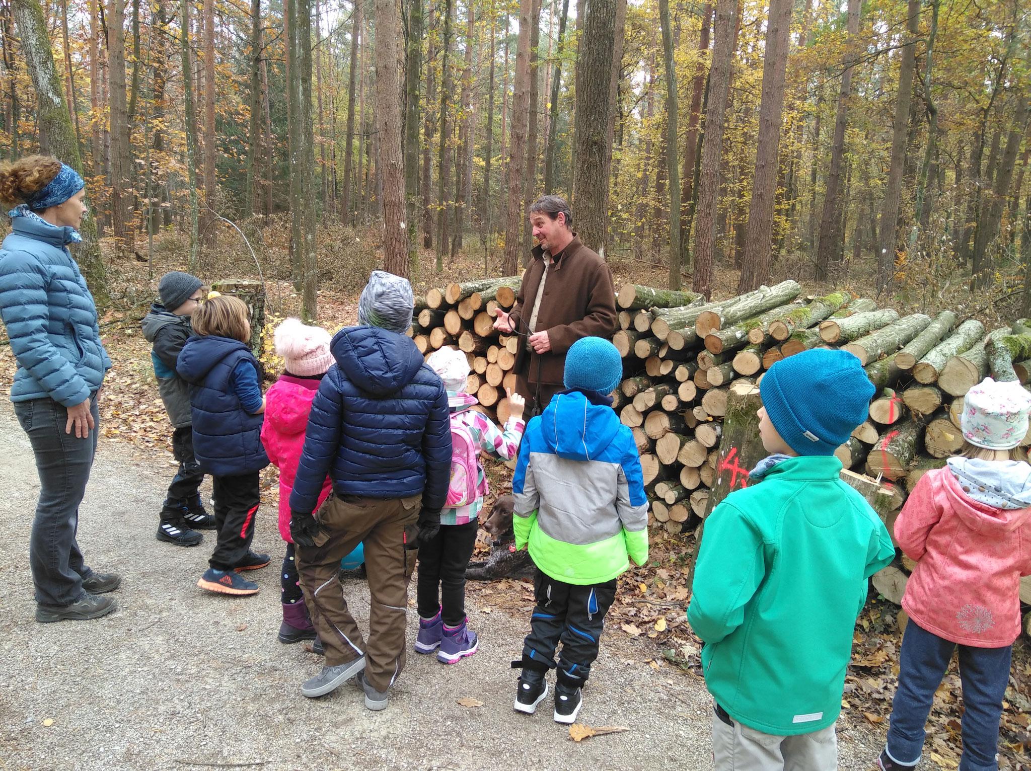 Hier erklärt uns der Förster, warum Waldwirtschaft betrieben wird