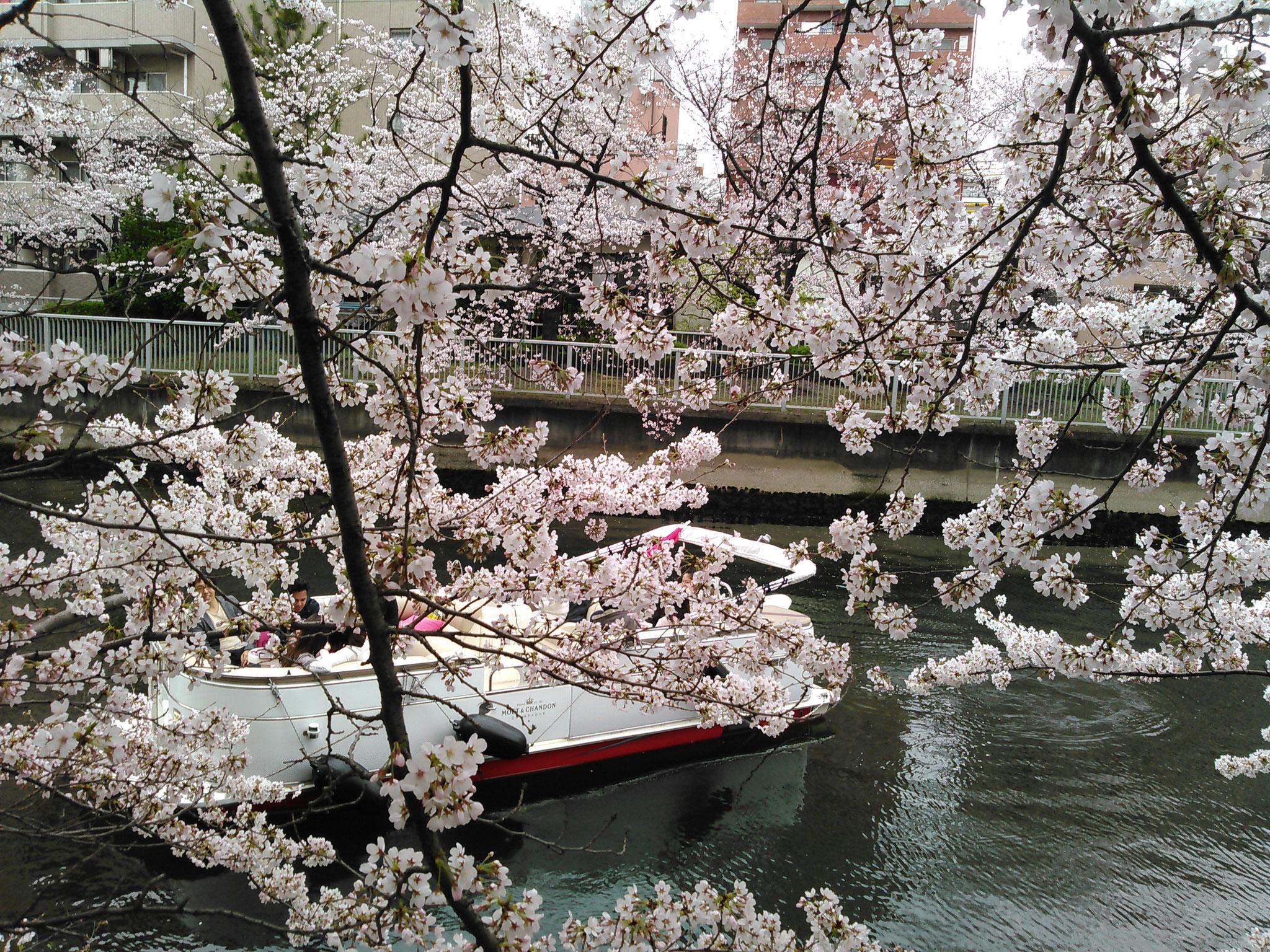 春は桜の名所クルーズ!