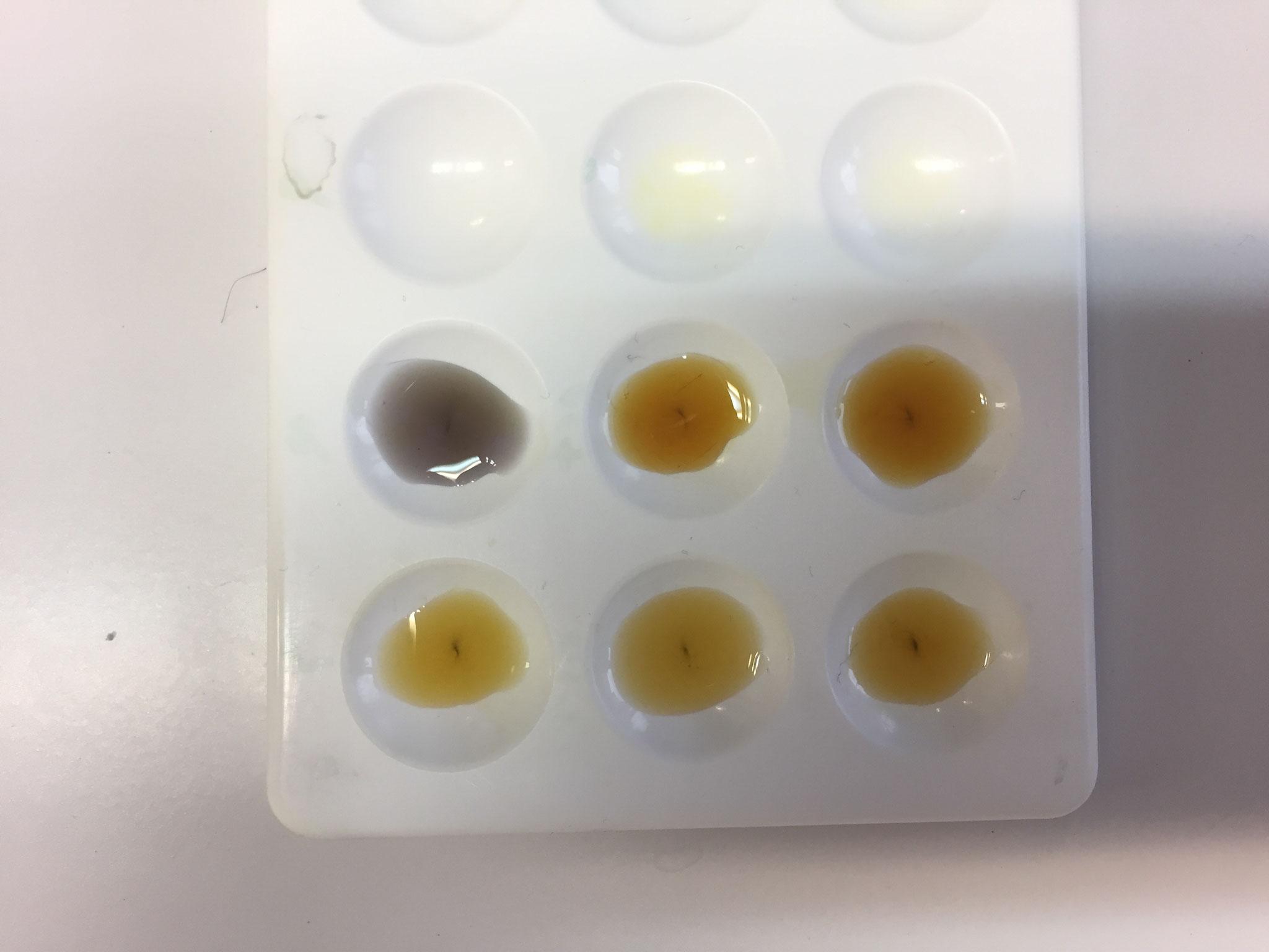résultats expérimentaux mettant en évidence la nécessité d'une phosphorylation du glucose pour synthétiser l'amidon.