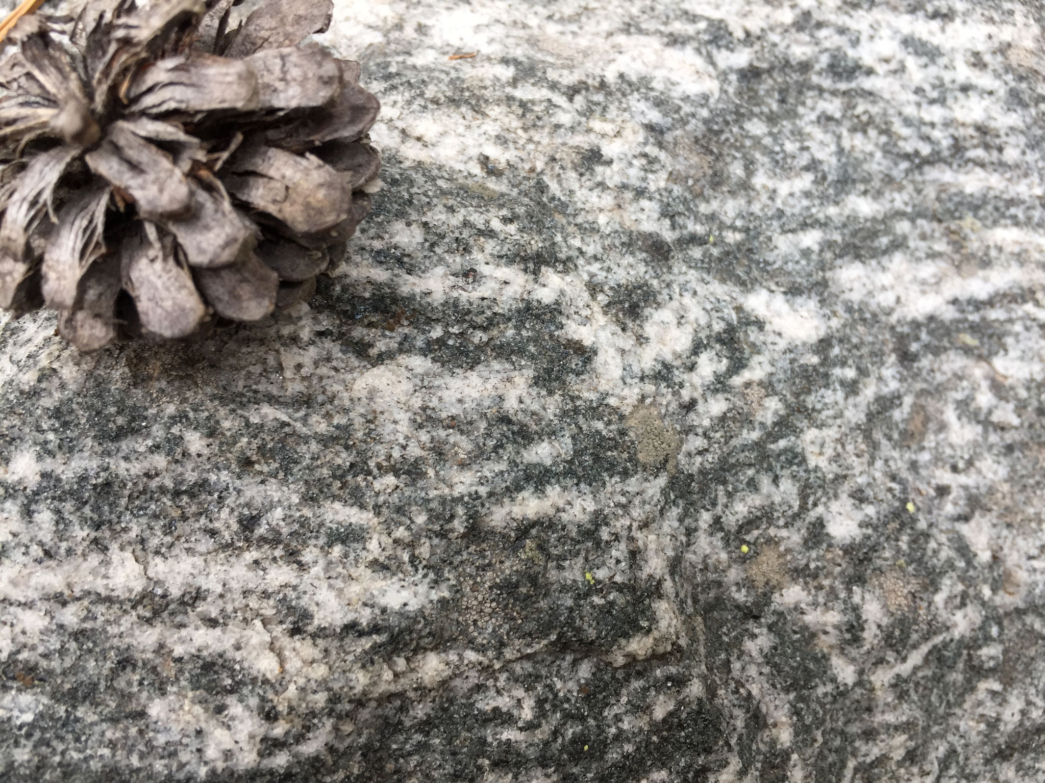 Migmatite au Parc de Grand Teton (USA)