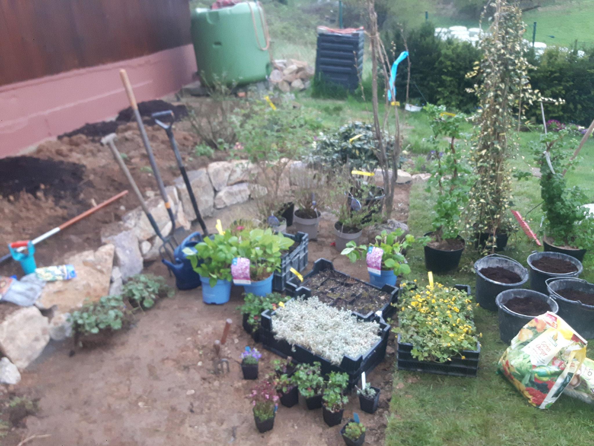 Kurz vor der Pflanzung