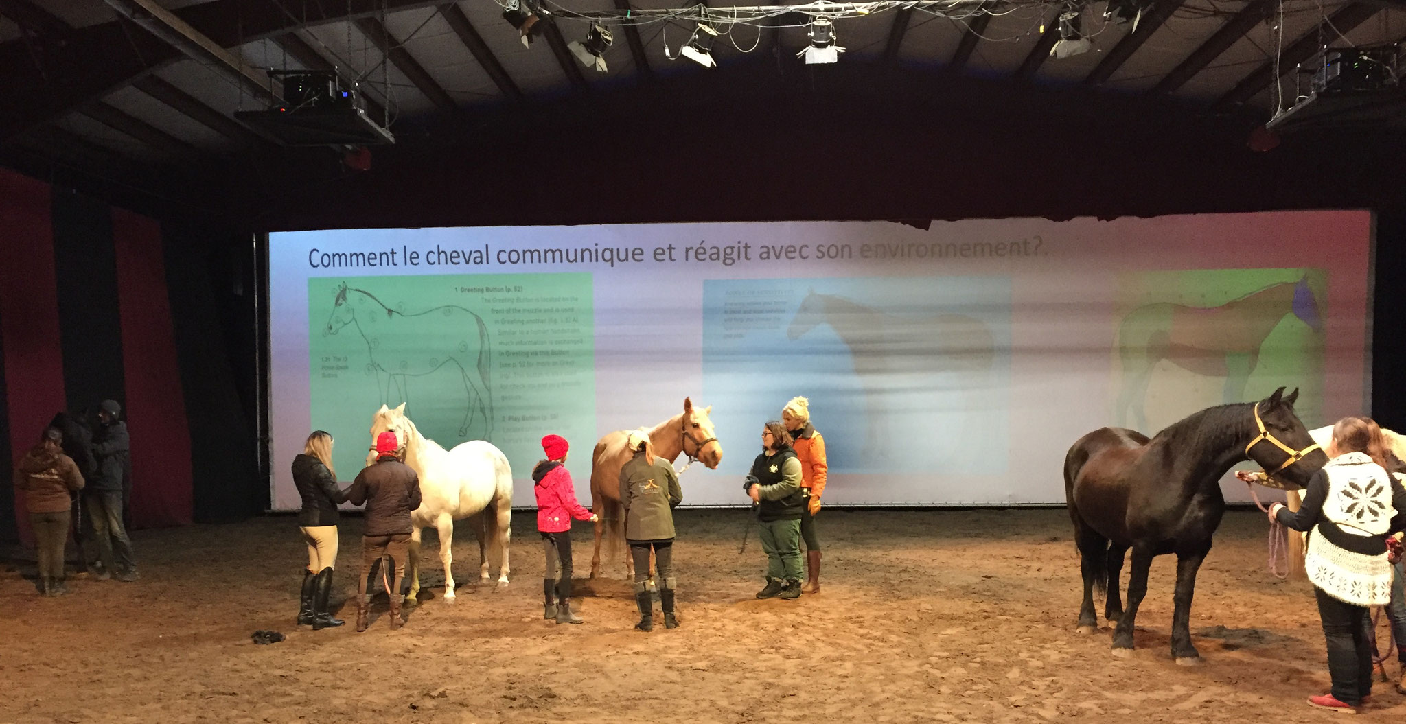 "Formation ""Chevaux-artistes!"""