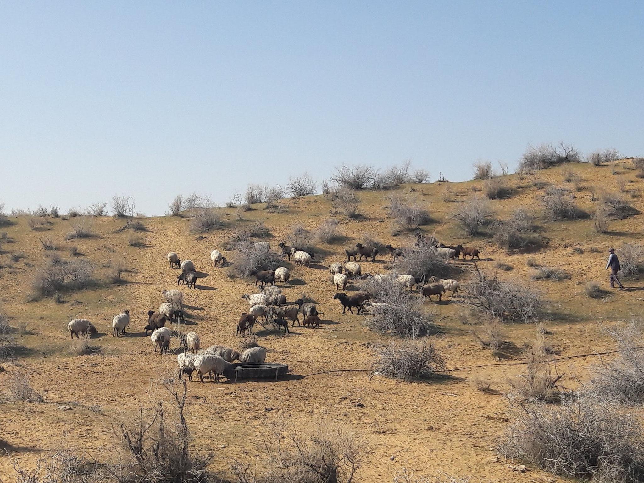 Les steppes d'Asie centrale : Ouzbekistan