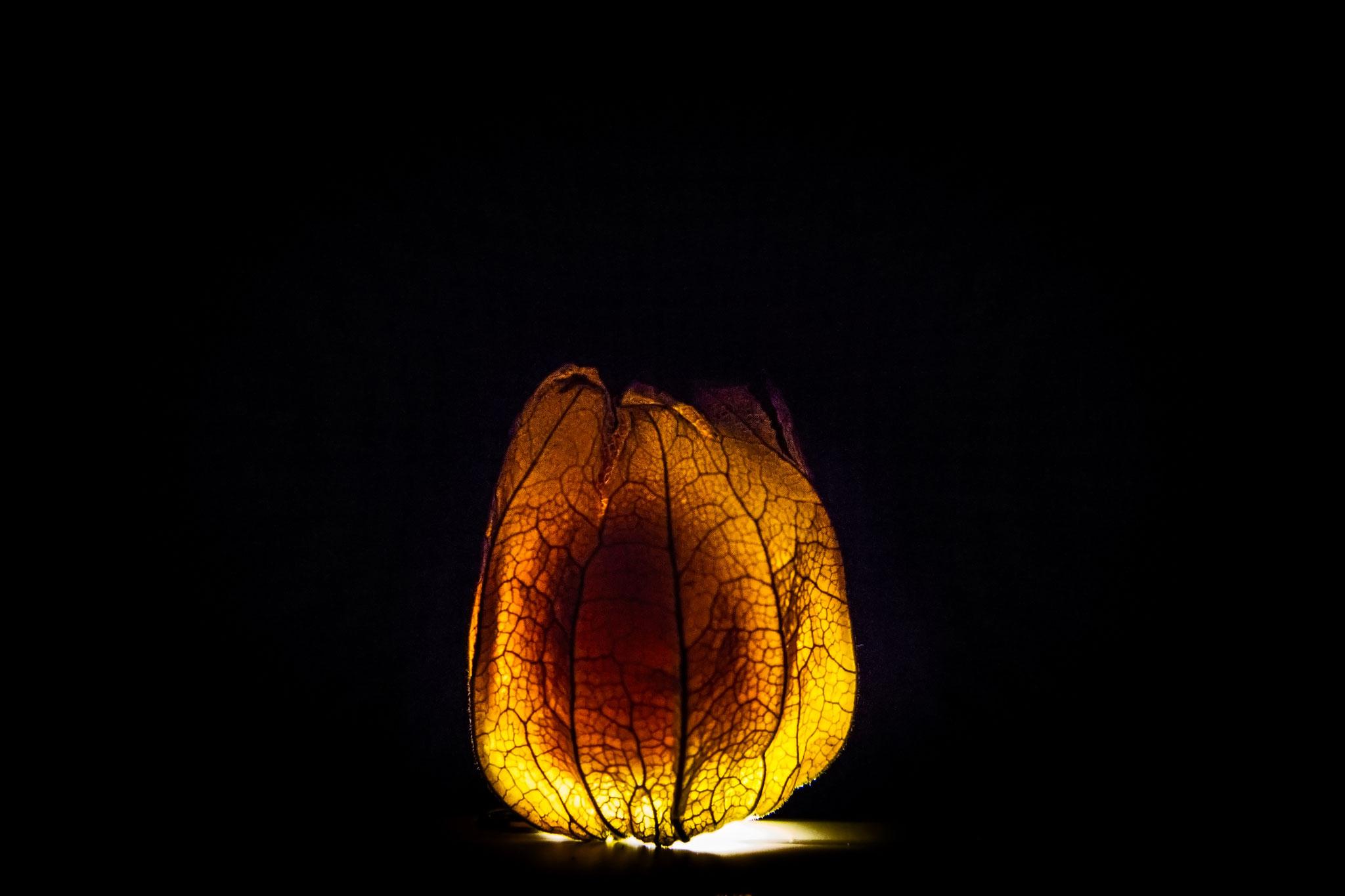 Physalis Light