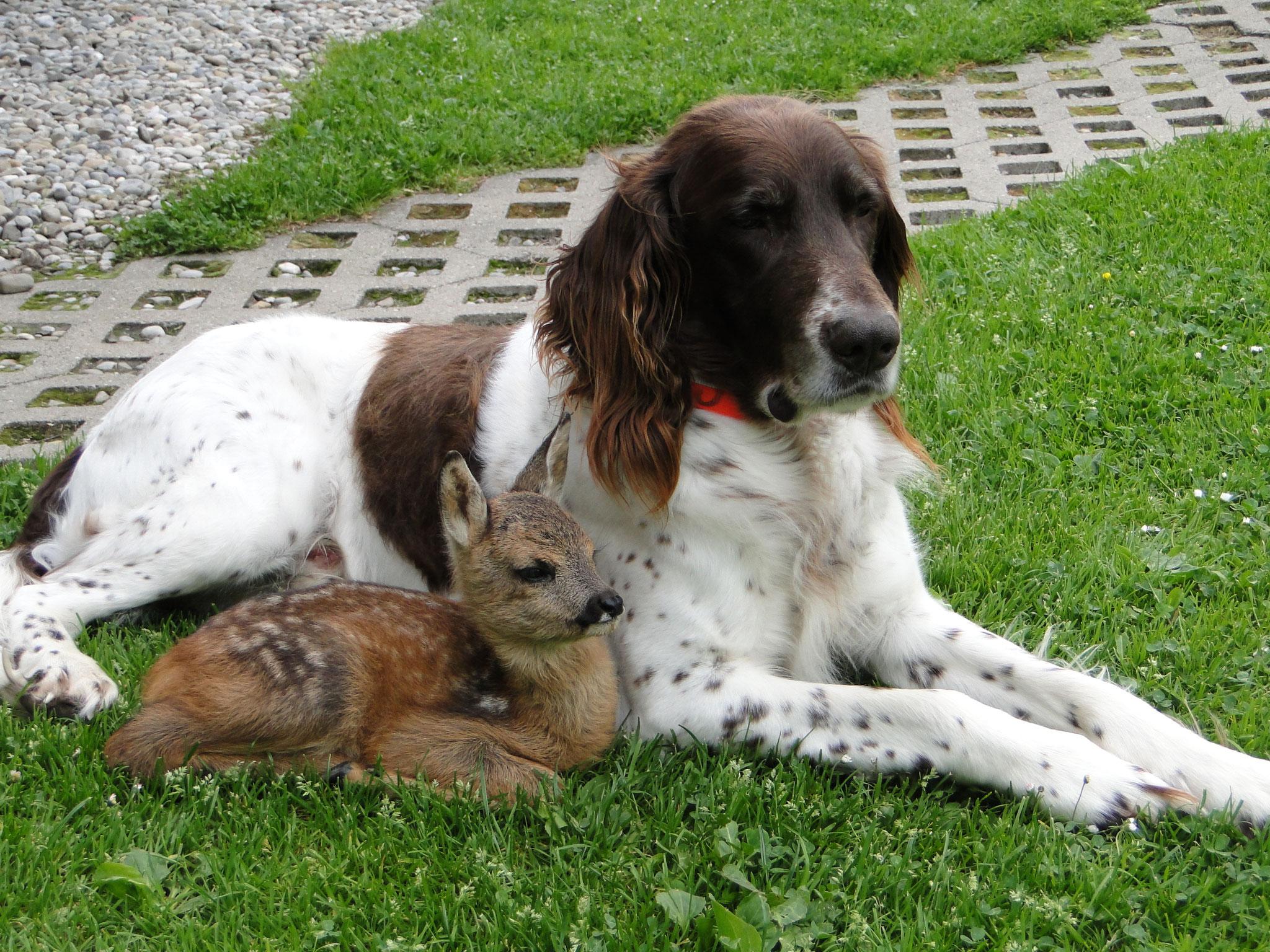Jack mit Liesele