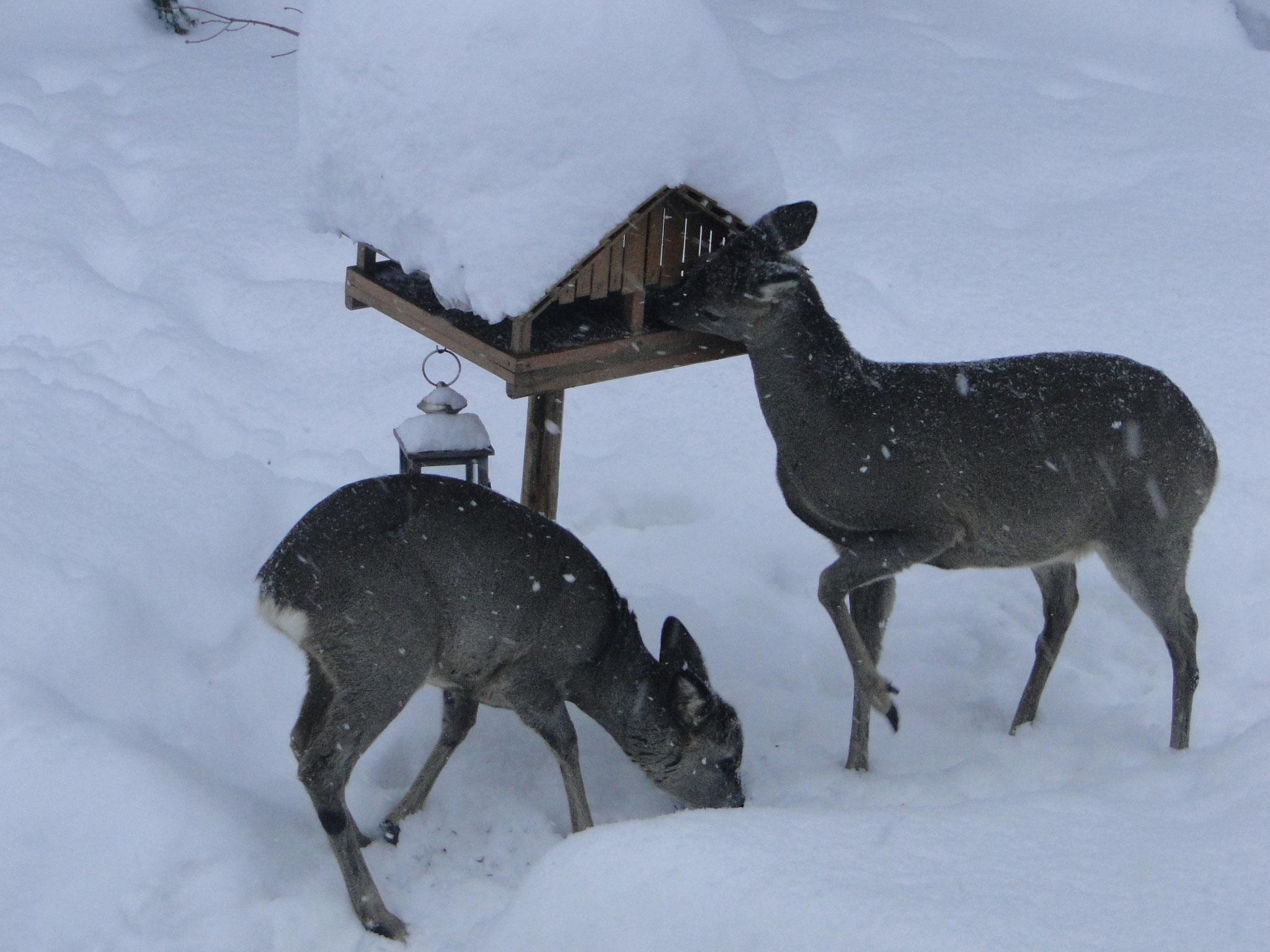 Wintergäste