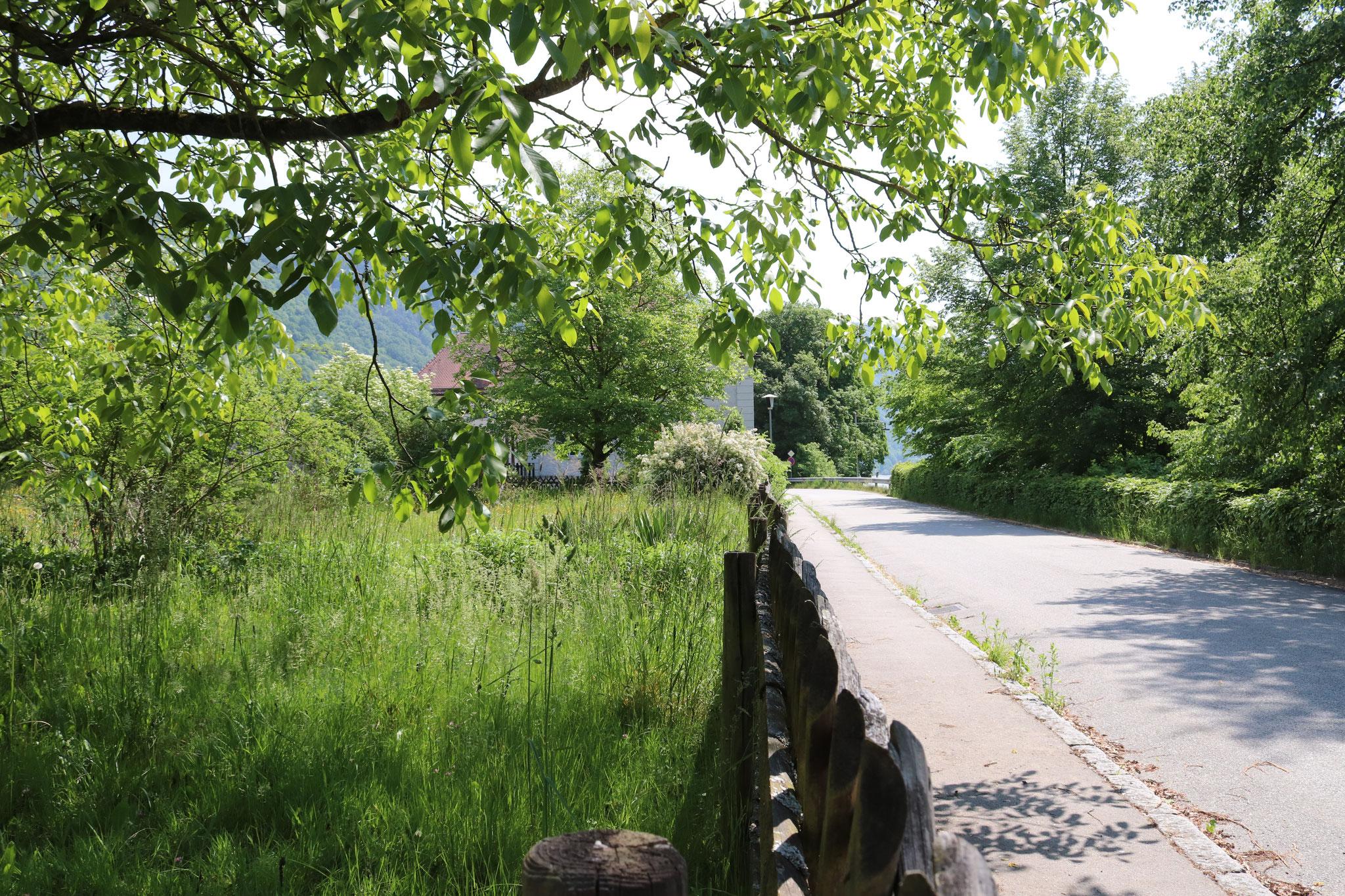 Donauvilla Jochenstein Garten Südgrenze