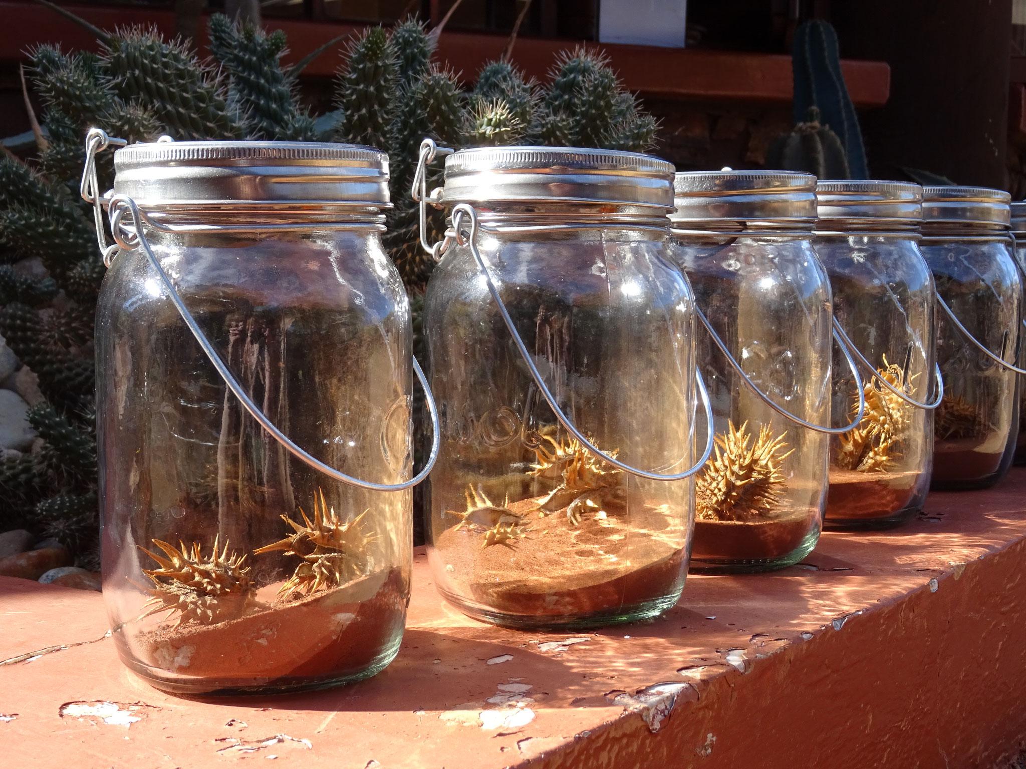 Solar Jars in Kuruman / Kalahari