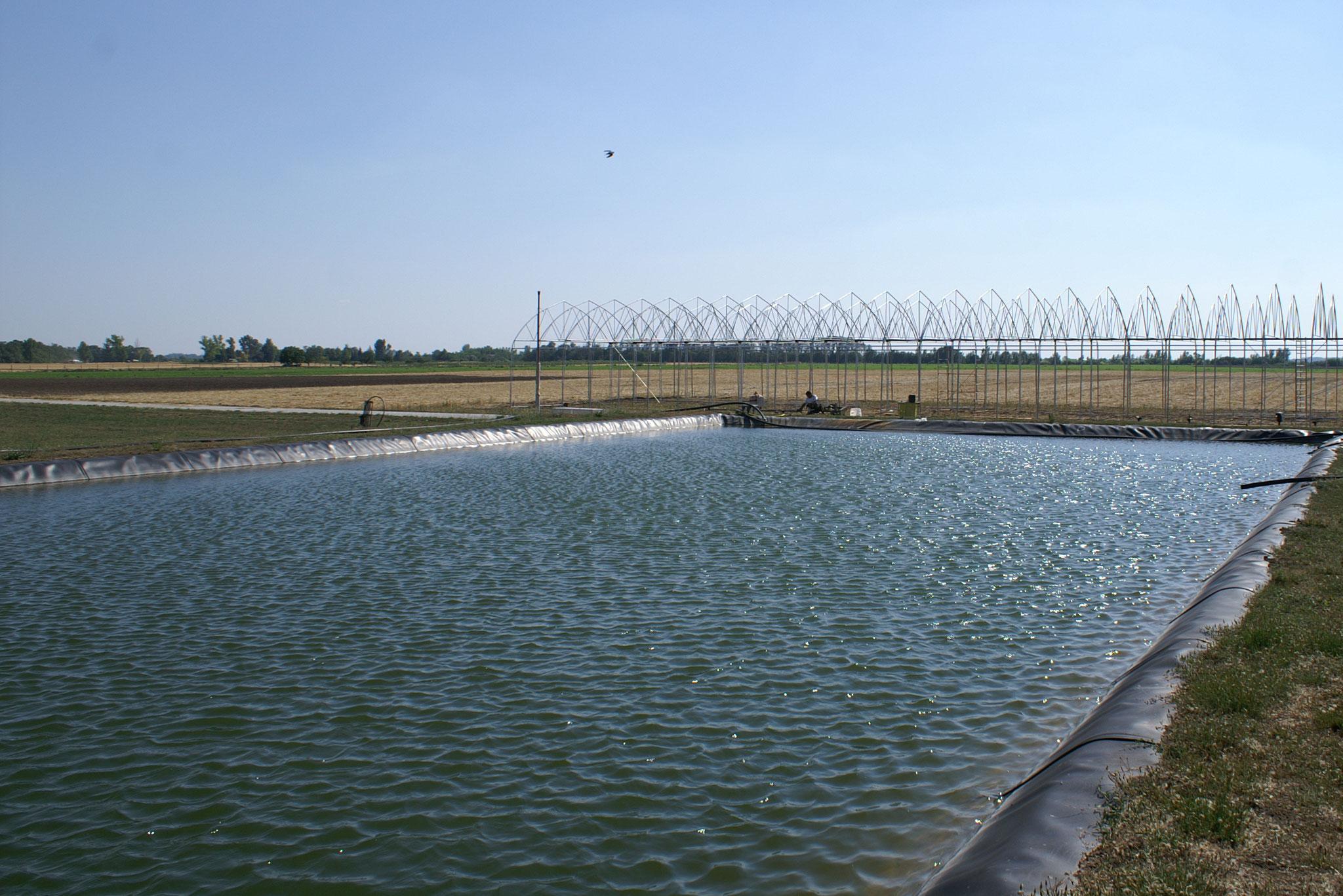 2. Möglichkeit, man verteilt KE-plant in das Becken, aus dem die Bewässerung gespeist wird.
