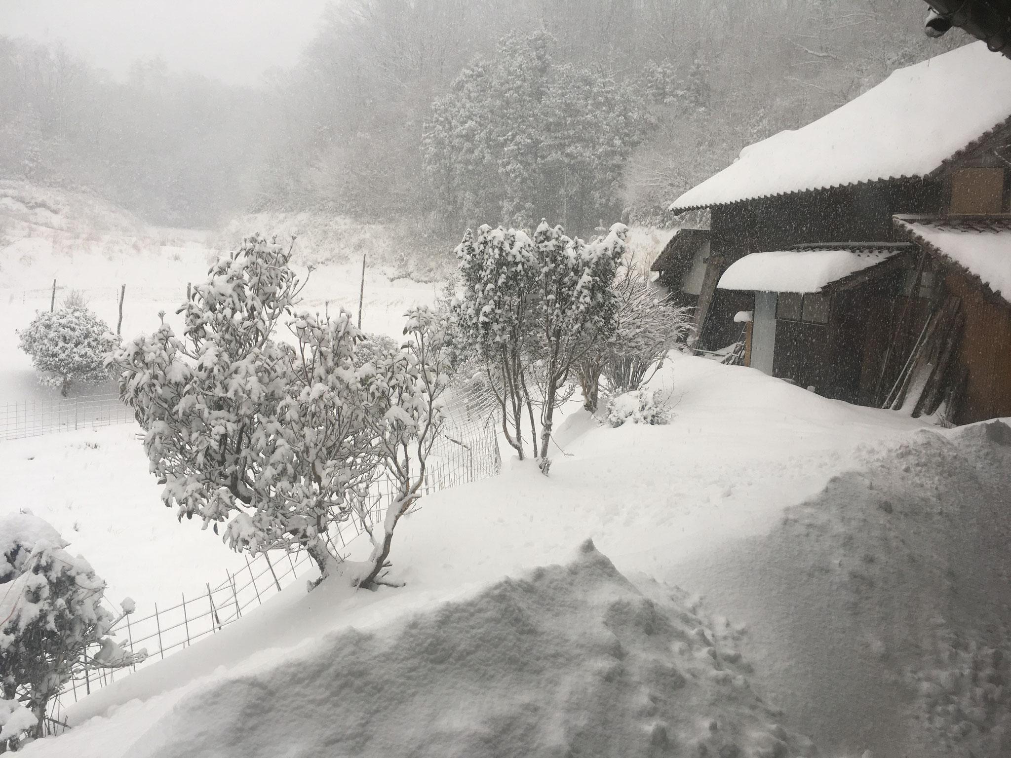 年に1度は、雪に埋もれます。除雪車が来るまで雪籠りです。