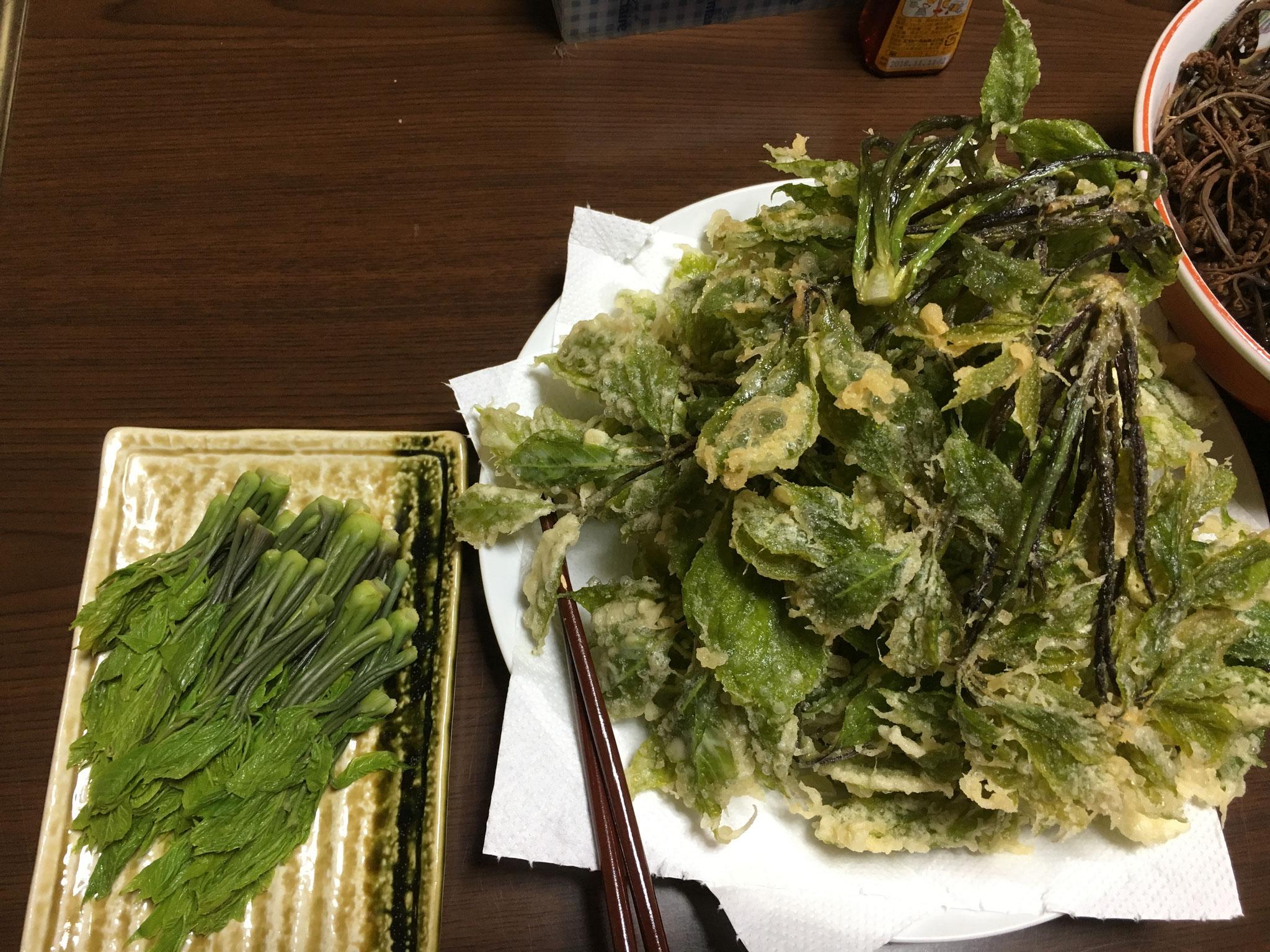 コシアブラのお浸しと、コシアブラの天ぷら