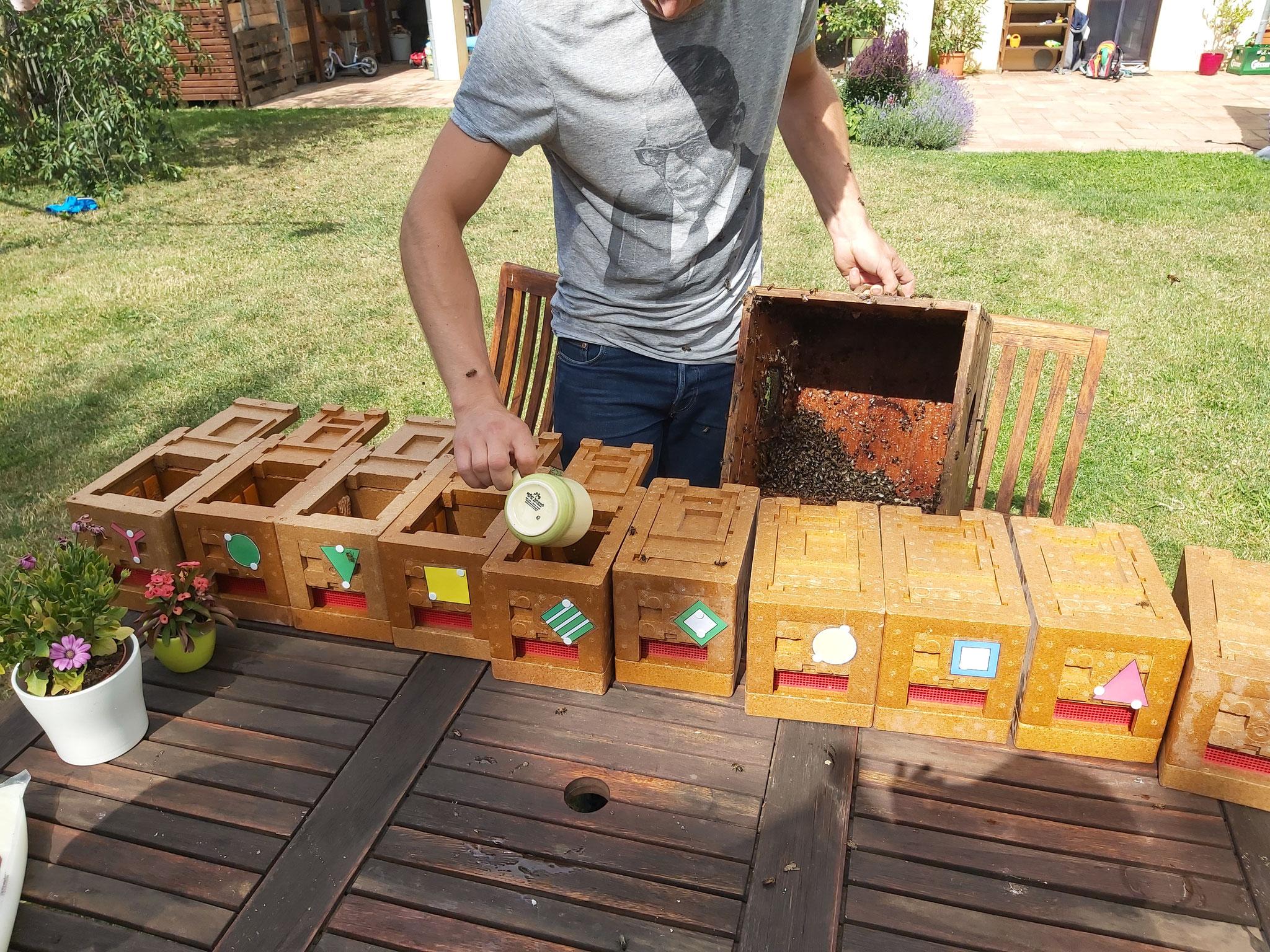 befüllen der Begattungskästchen mit Bienen.