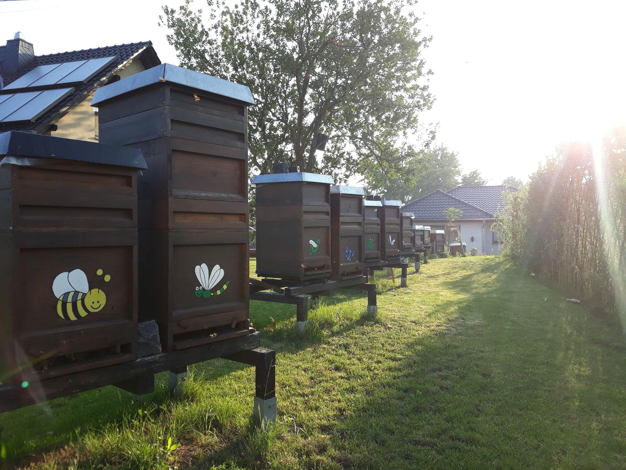 Der Bienenstand am frühen Morgen mit ersten ausfliegenden Bienen.