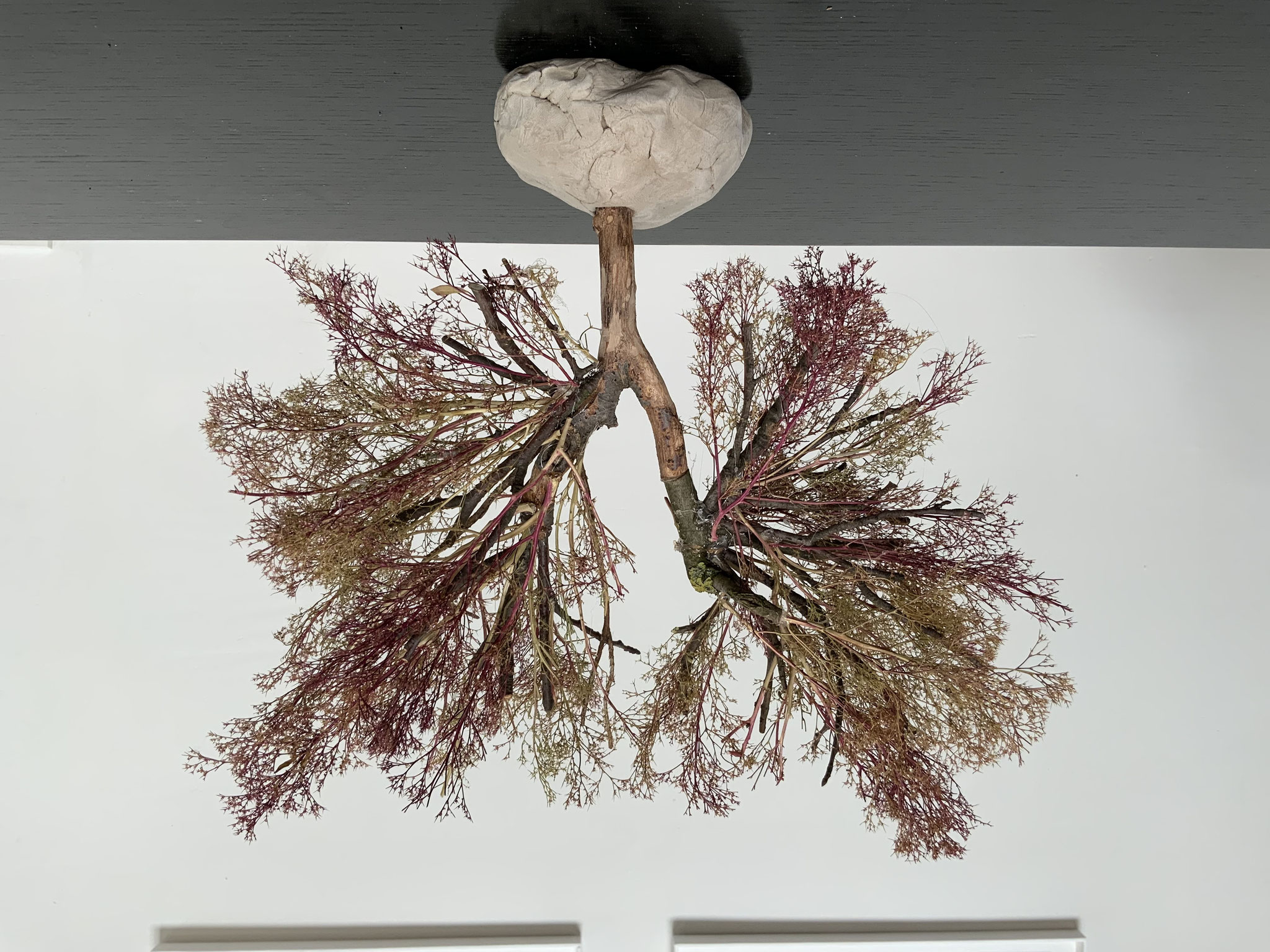 Lungenbaum Helene K.