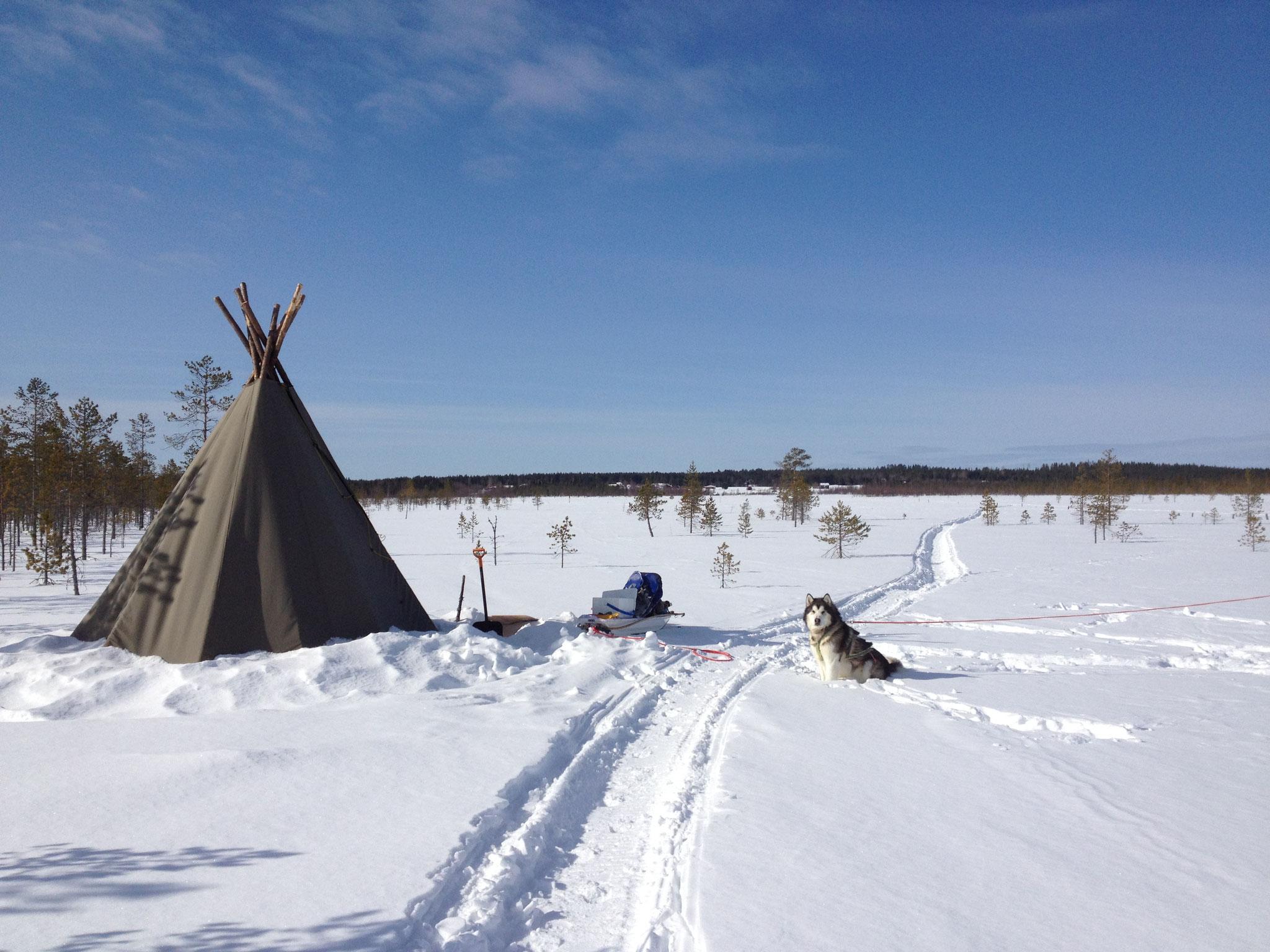 springtime camp. 2014.