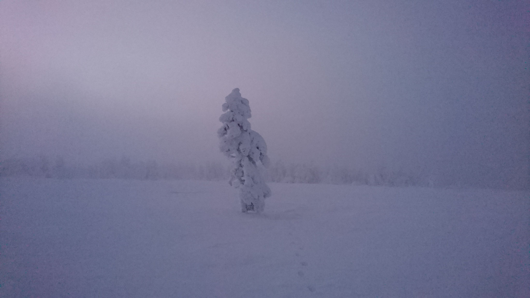 Christmas tree in Lapland 22th of December