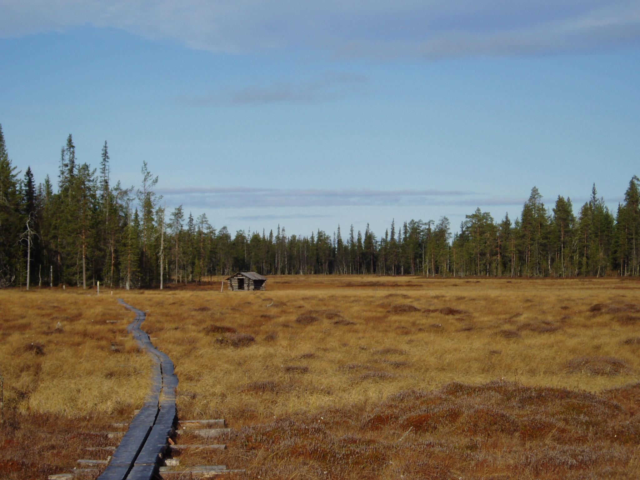 arctic wetlands.