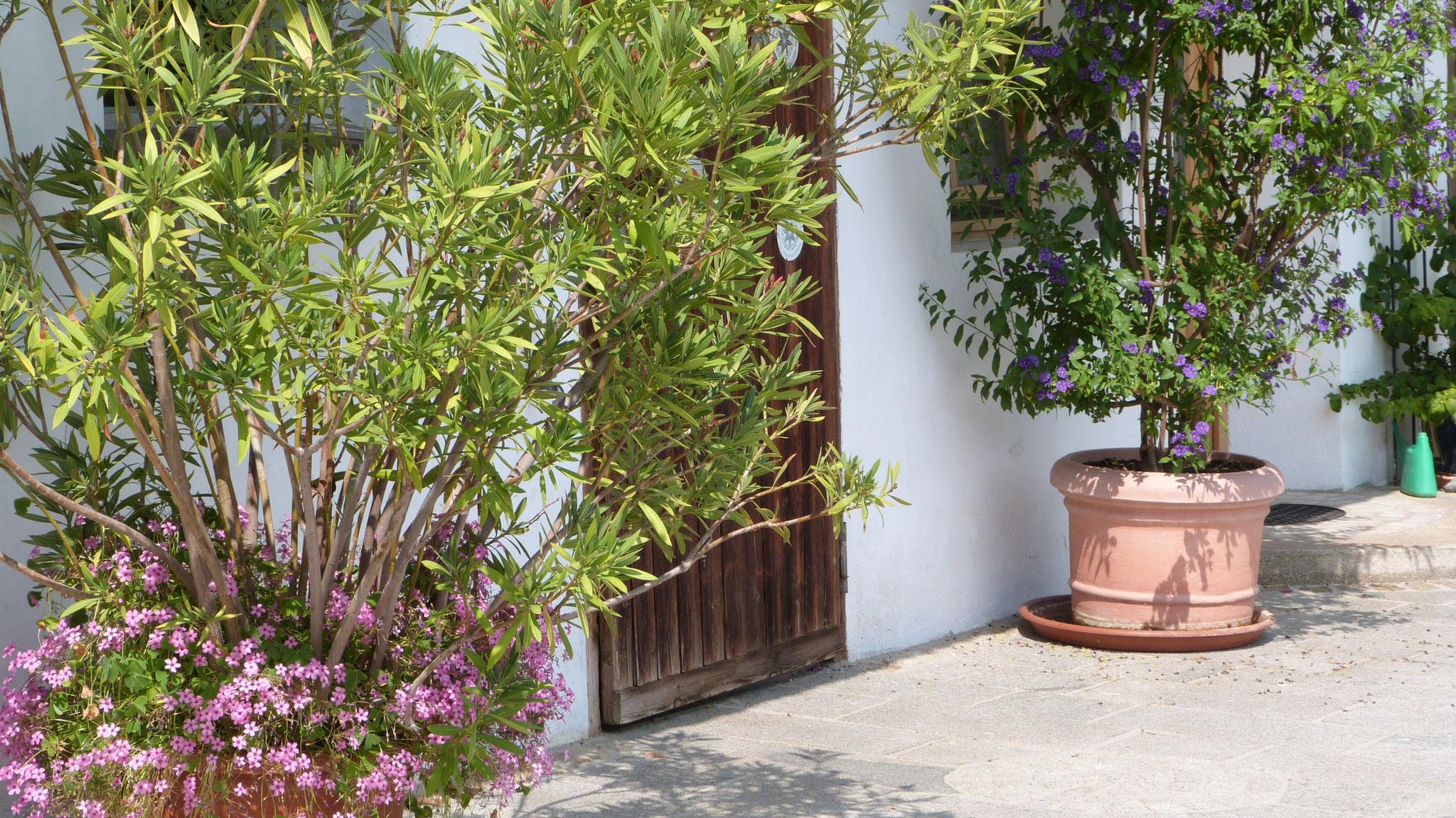 Oleander und Enzian