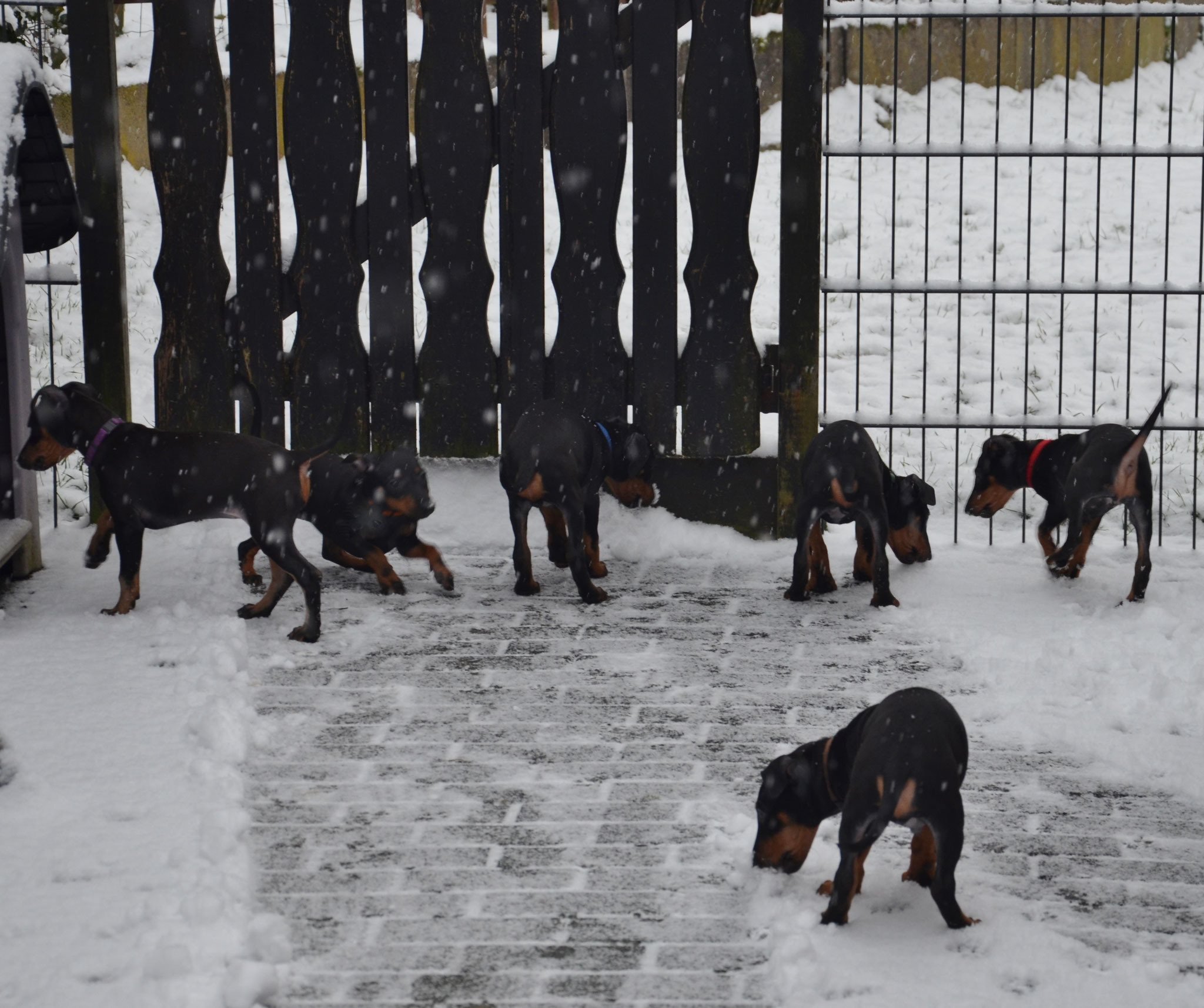 auch unsere Welpen haben Spaß im Schnee