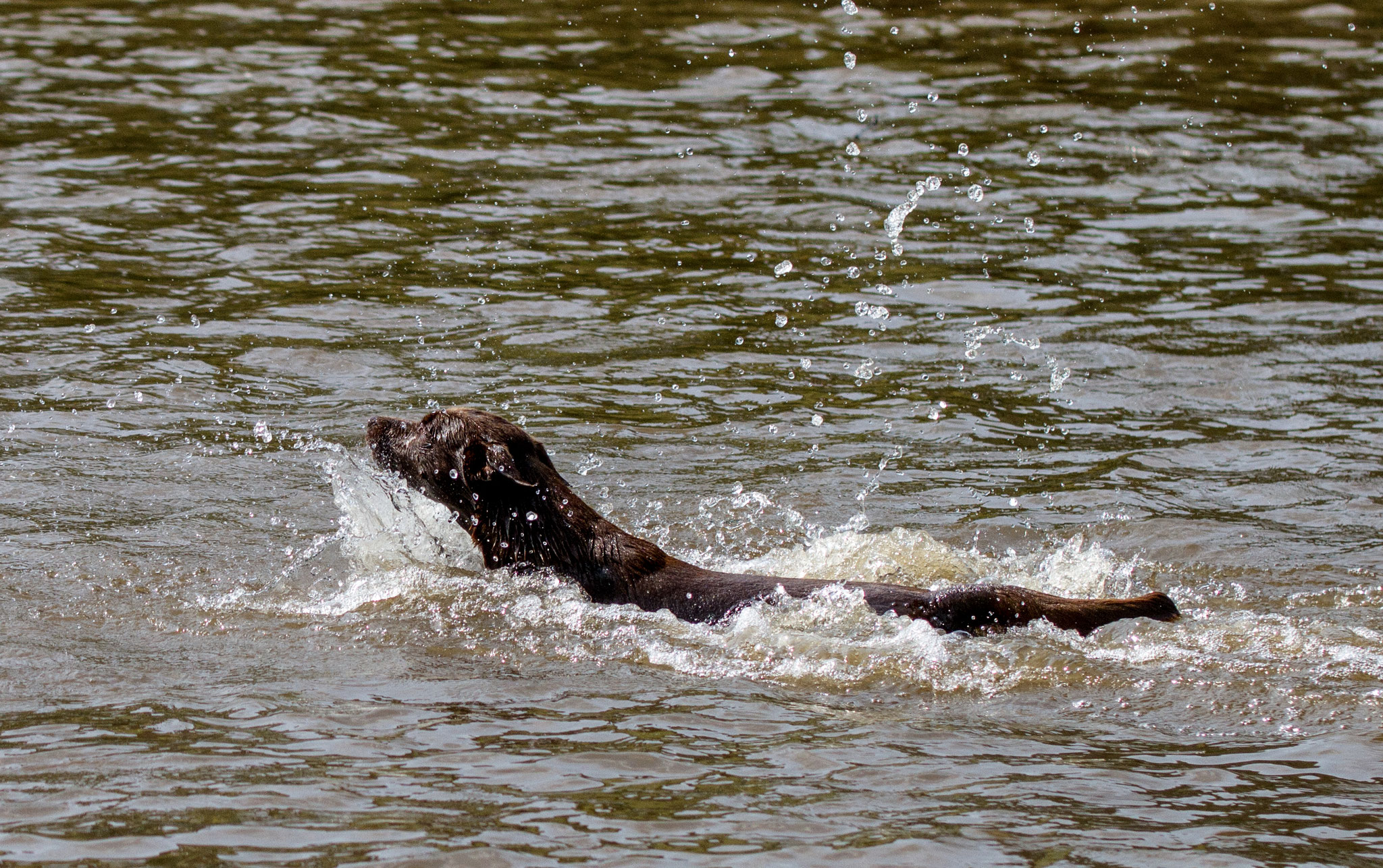 Batu ist ein großer schwimmer
