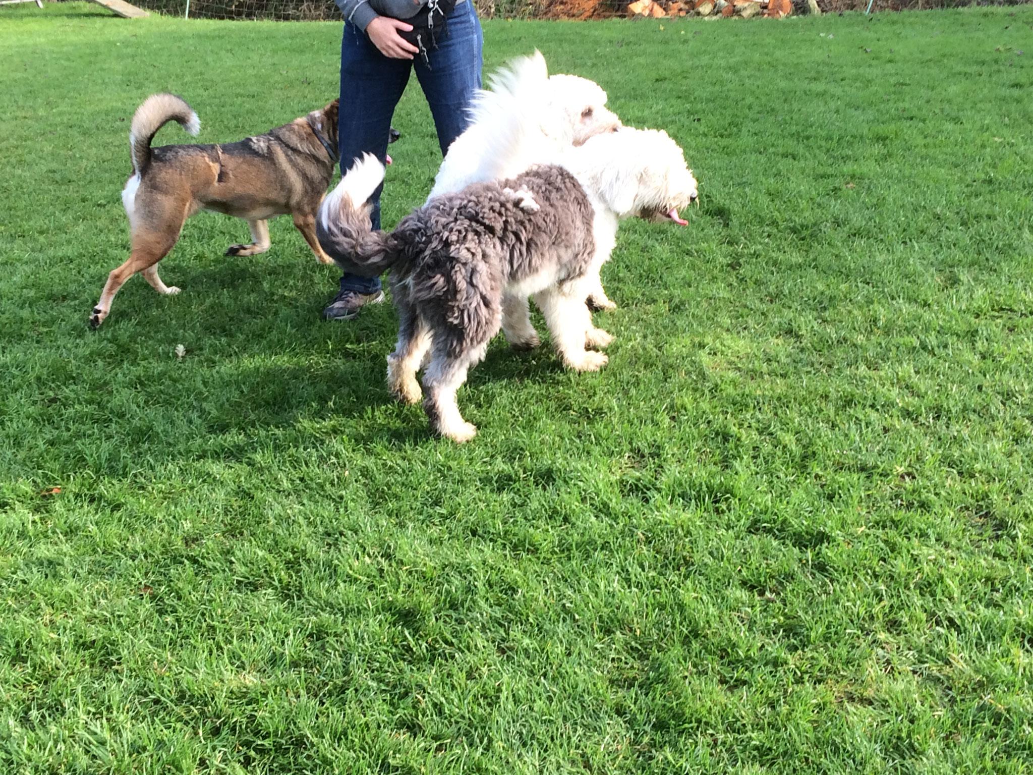 In der Spielstunde treffen sich Hunde unterschiedlichen Alters.