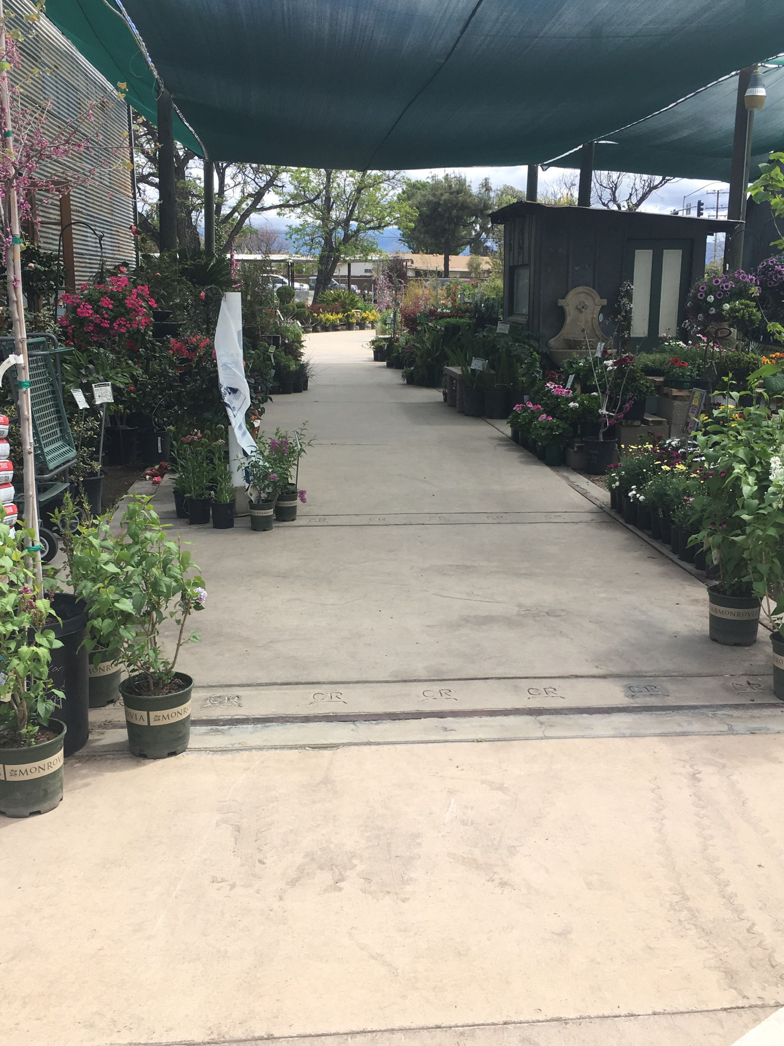 Cagliero Ranch Nursery Official Site- Hemet, C A - Quality
