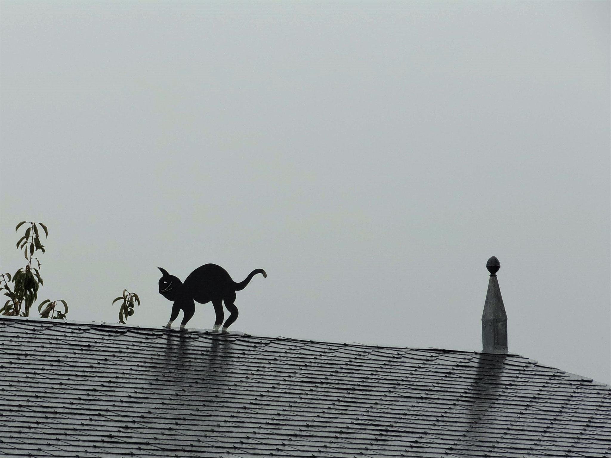 Chat sur un toit à Acy