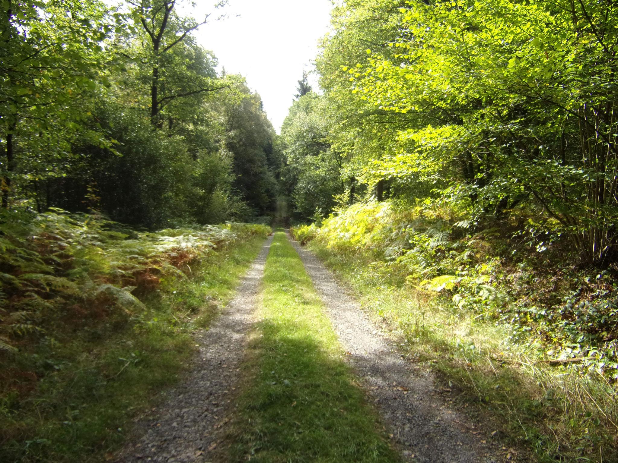 Forêt de Saint-Michel