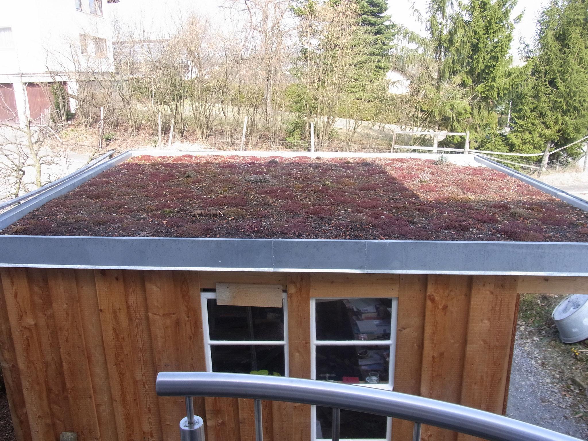 Dachbegrünung eines Gartenhauses