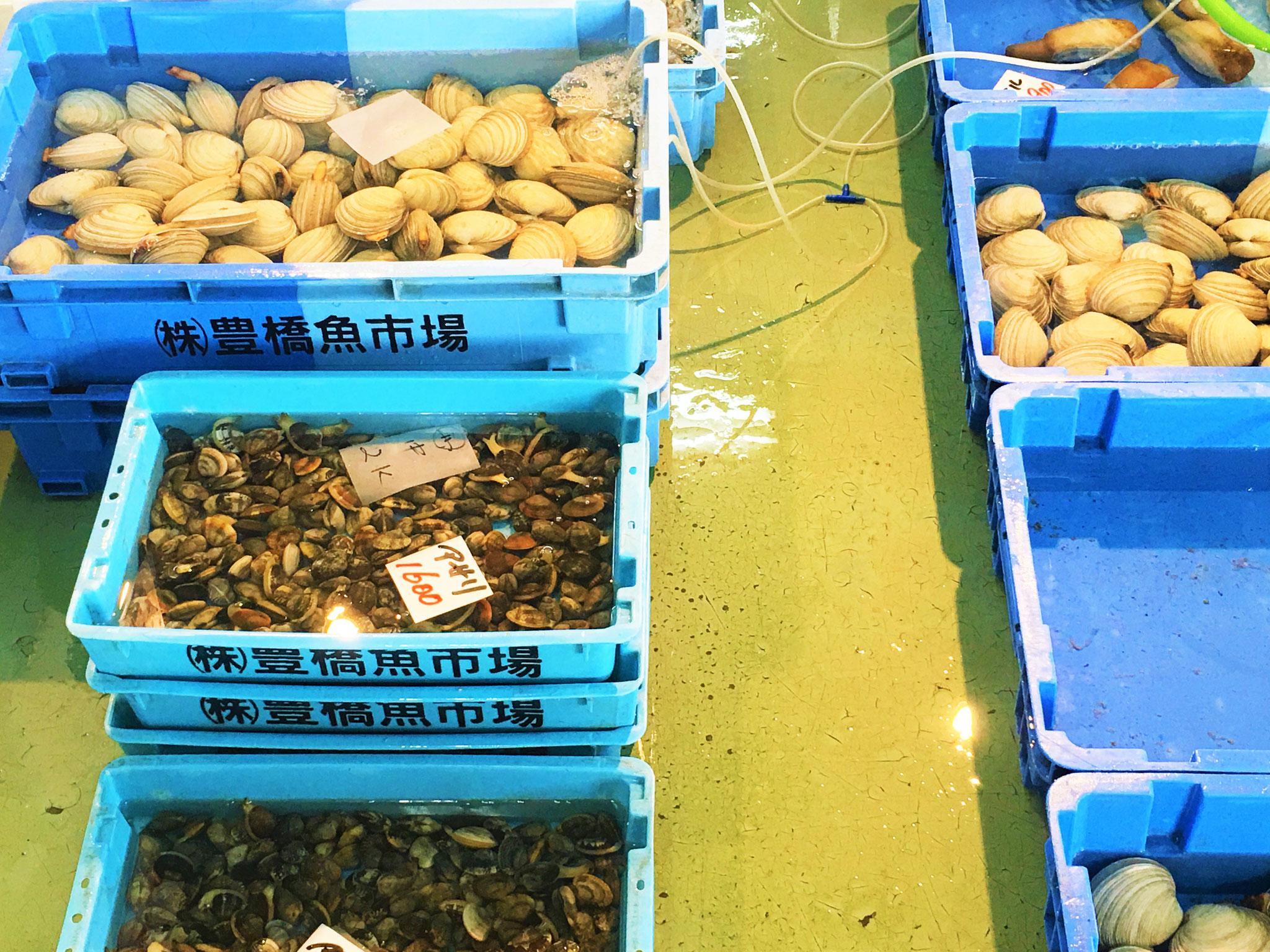 伊良湖産の大アサリやアサリなど貝類も豊富に取り揃えています!