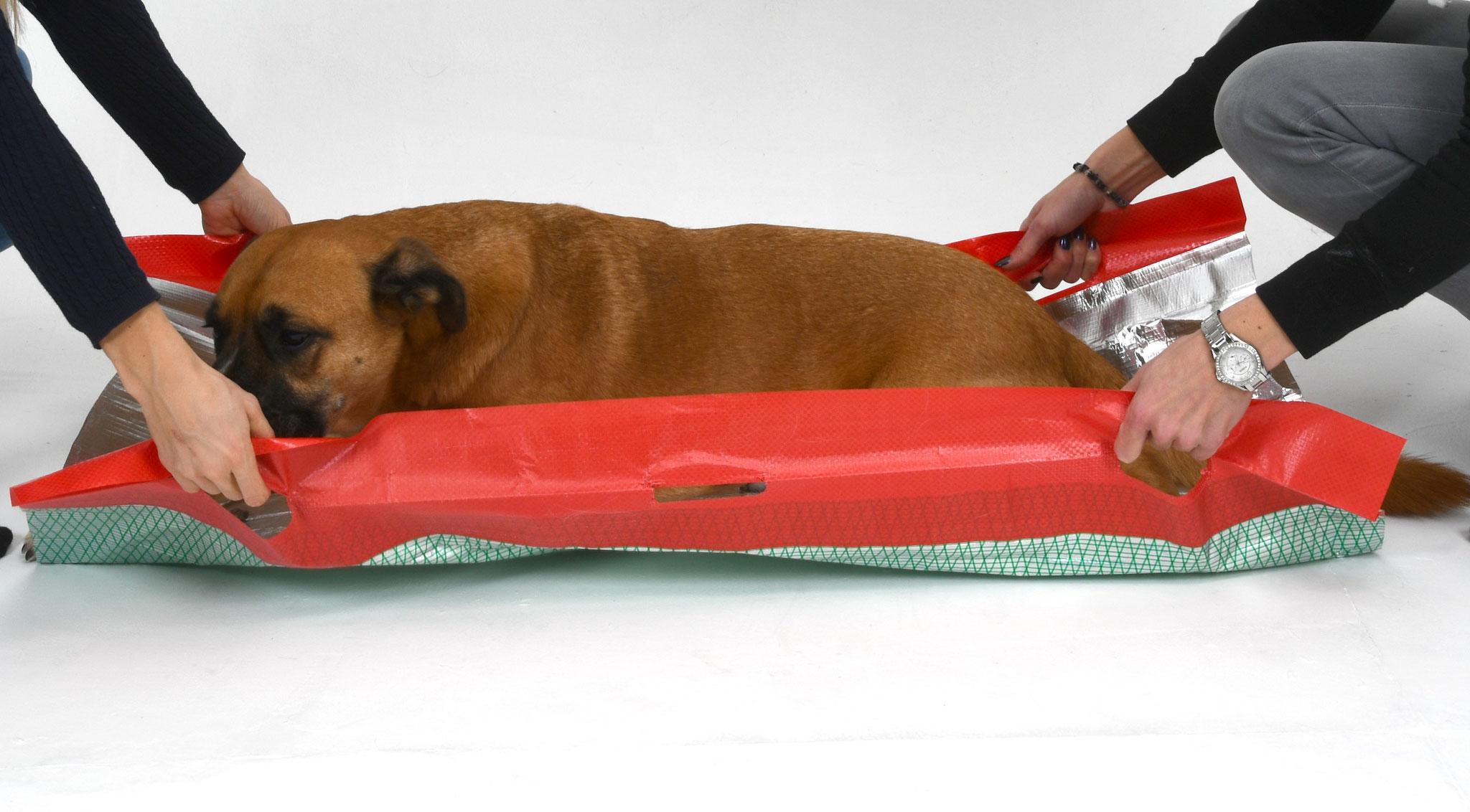 Die Rettungsdecke spendet Ihrem verletzten Hund sofortige Wärme und Schutz.