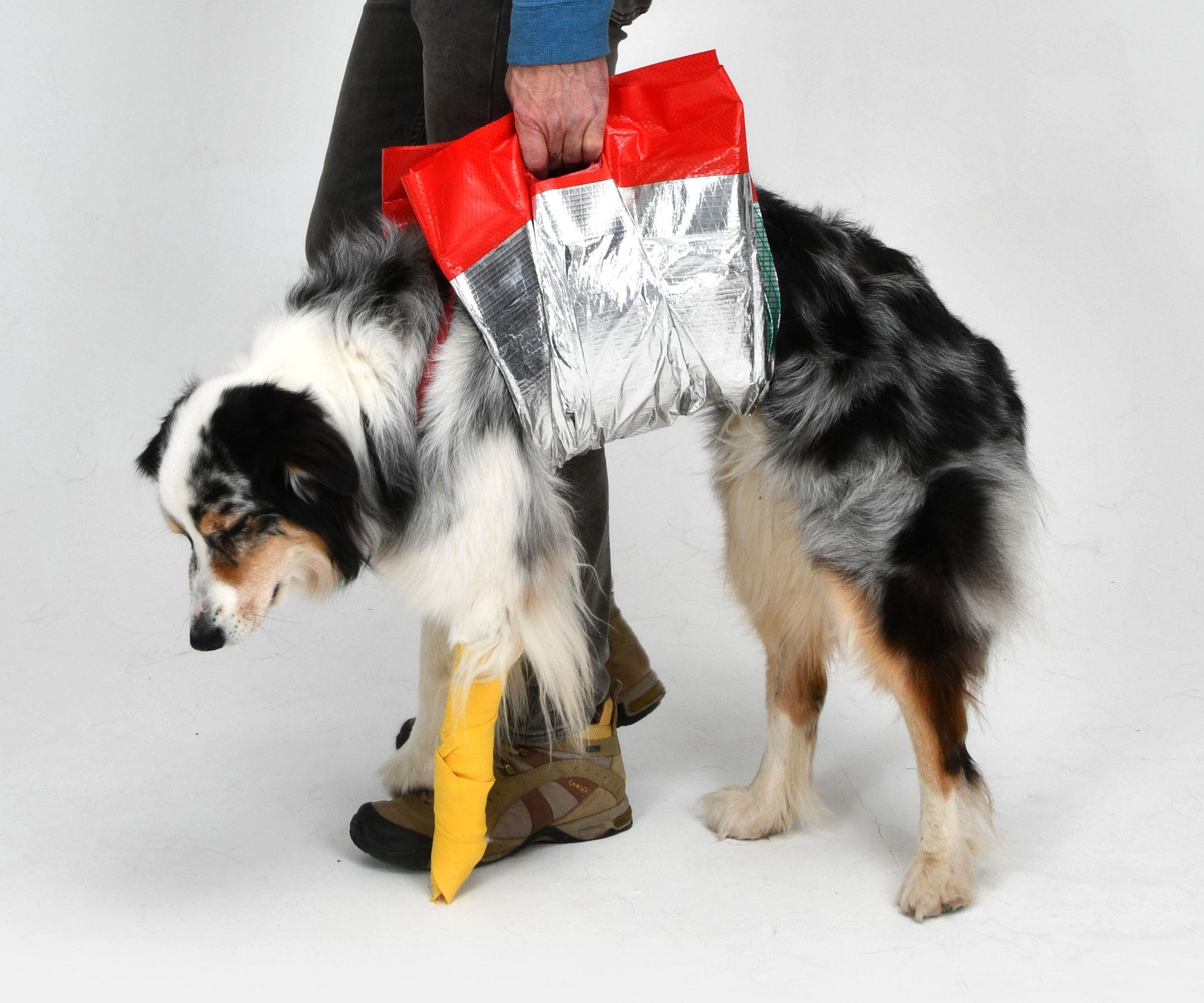Geh-Hilfe für Hunde. Ihr Sofort-Helfer für Hunde mit Bewegungseinschränkung.