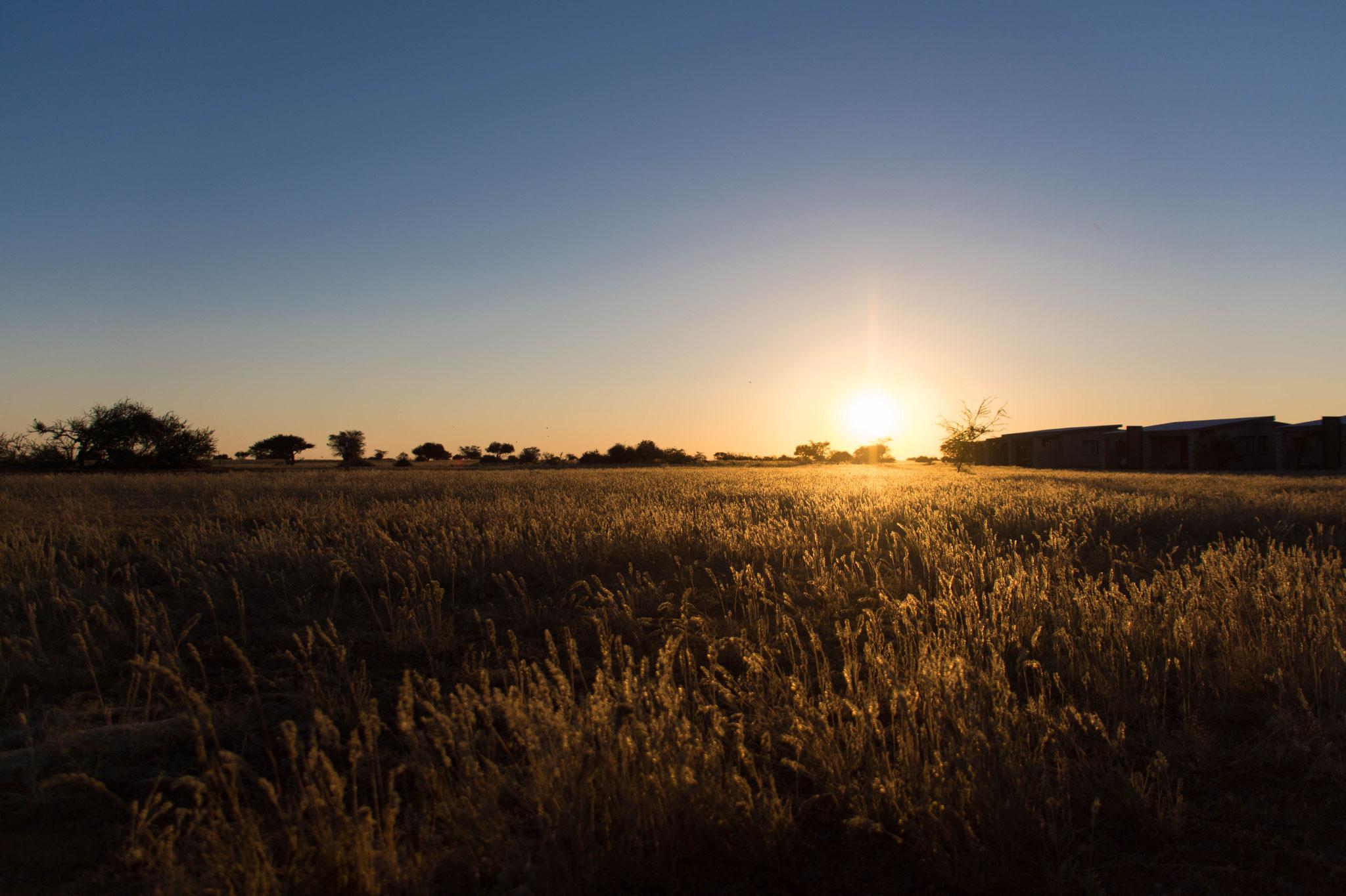 Sonnenuntergang über dem Grasland