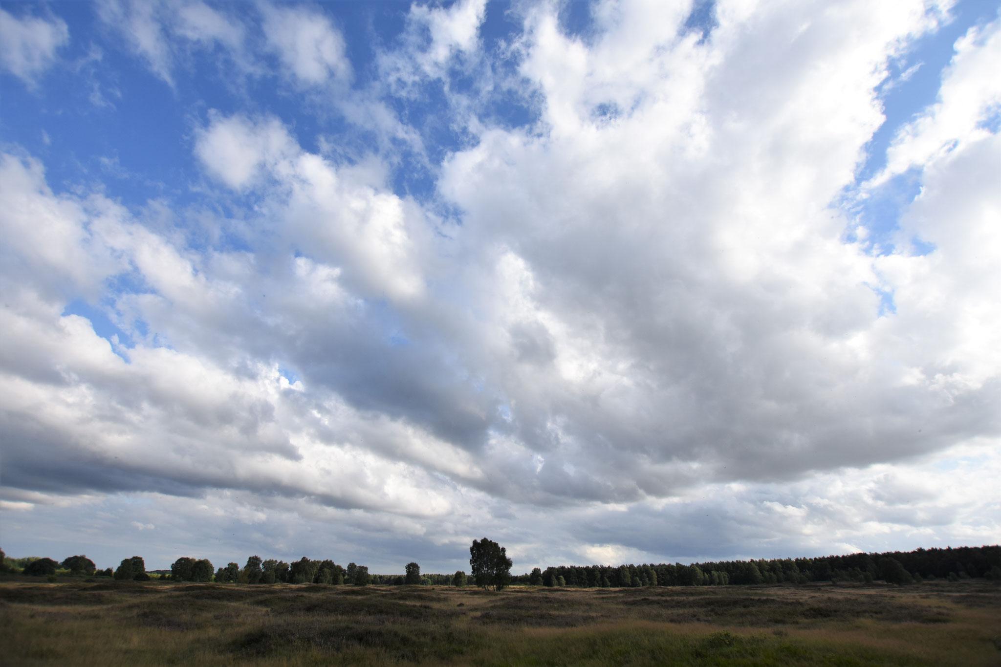 Pestruper Heide