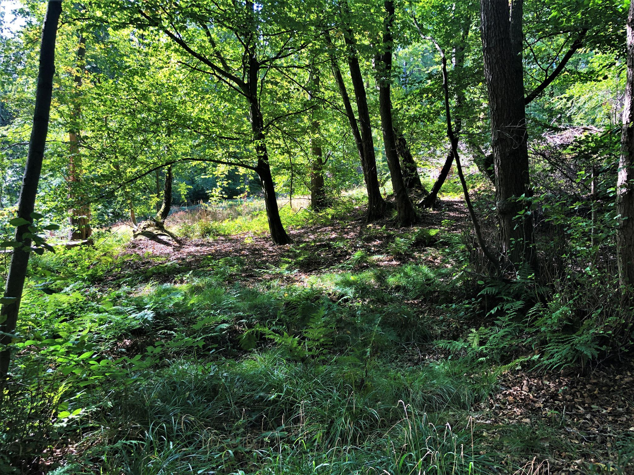 Wald bei Lorsbach