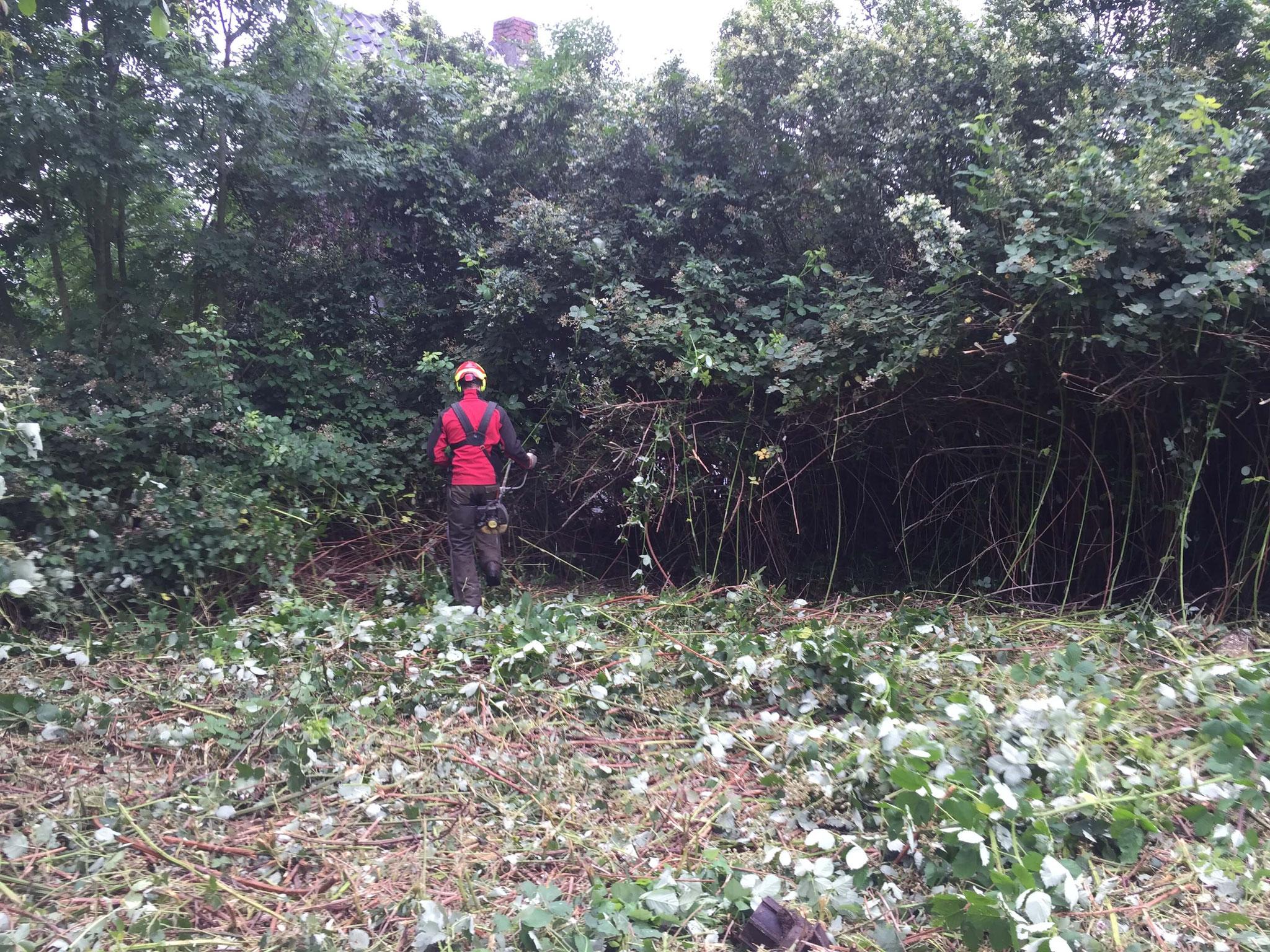 Entfernung von Unterwuchs und Unterholz