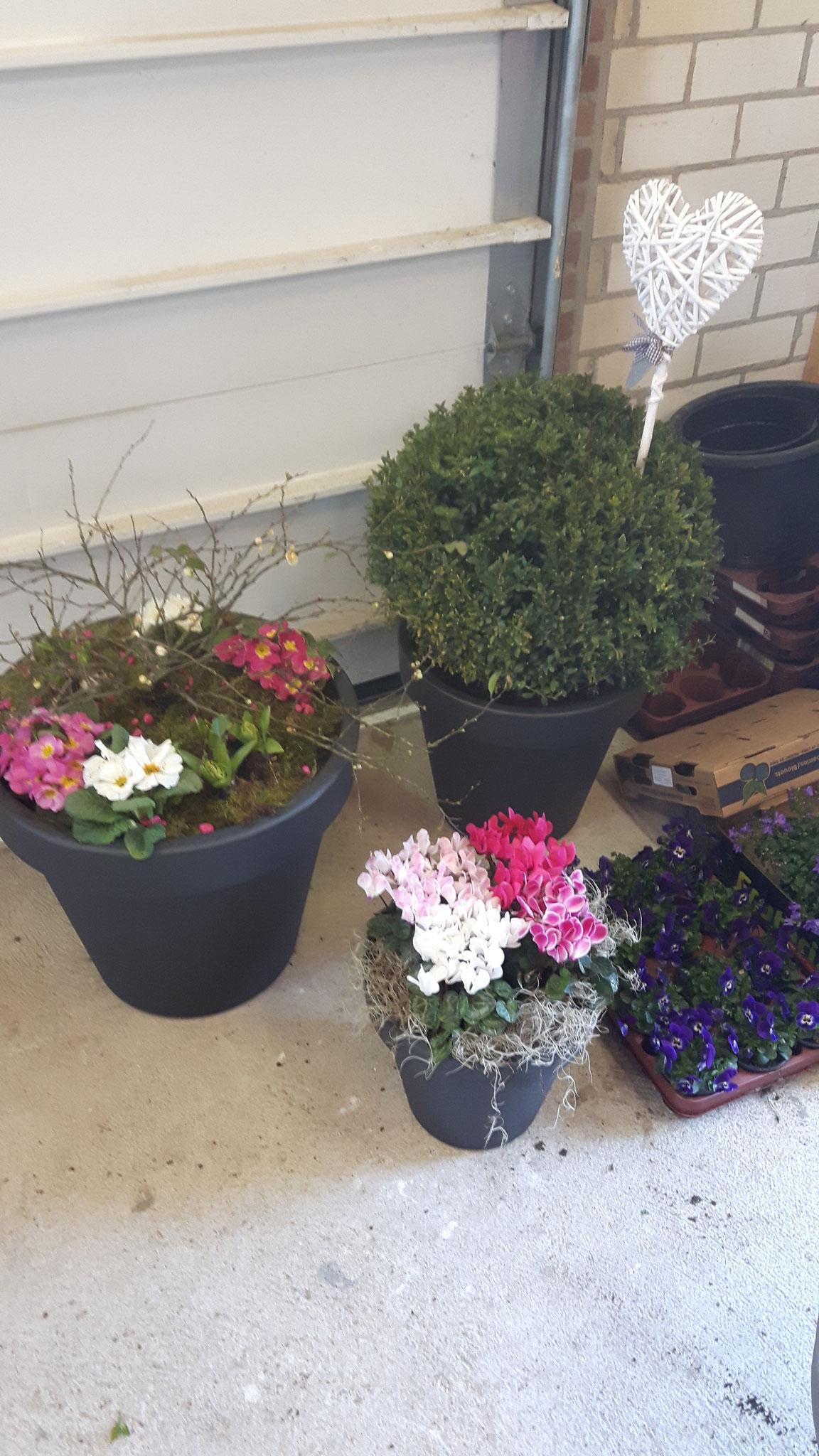 Set bestaande uit 3 bloempotten in verschillende formaten opgevuld met vaste planten en seizoensbloeiers