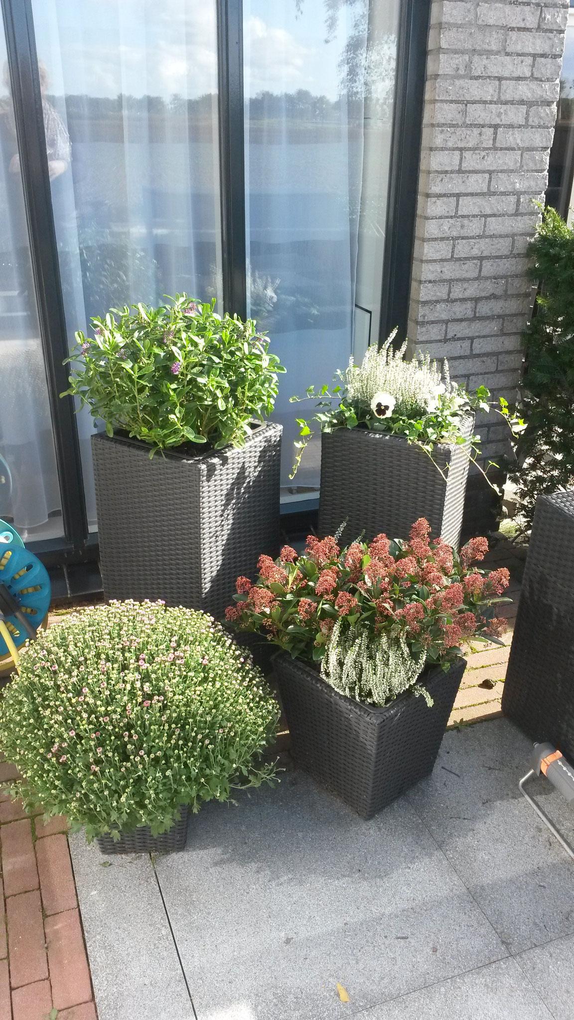 Opvullen van bestaande bloembakken met najaarsbloeiers