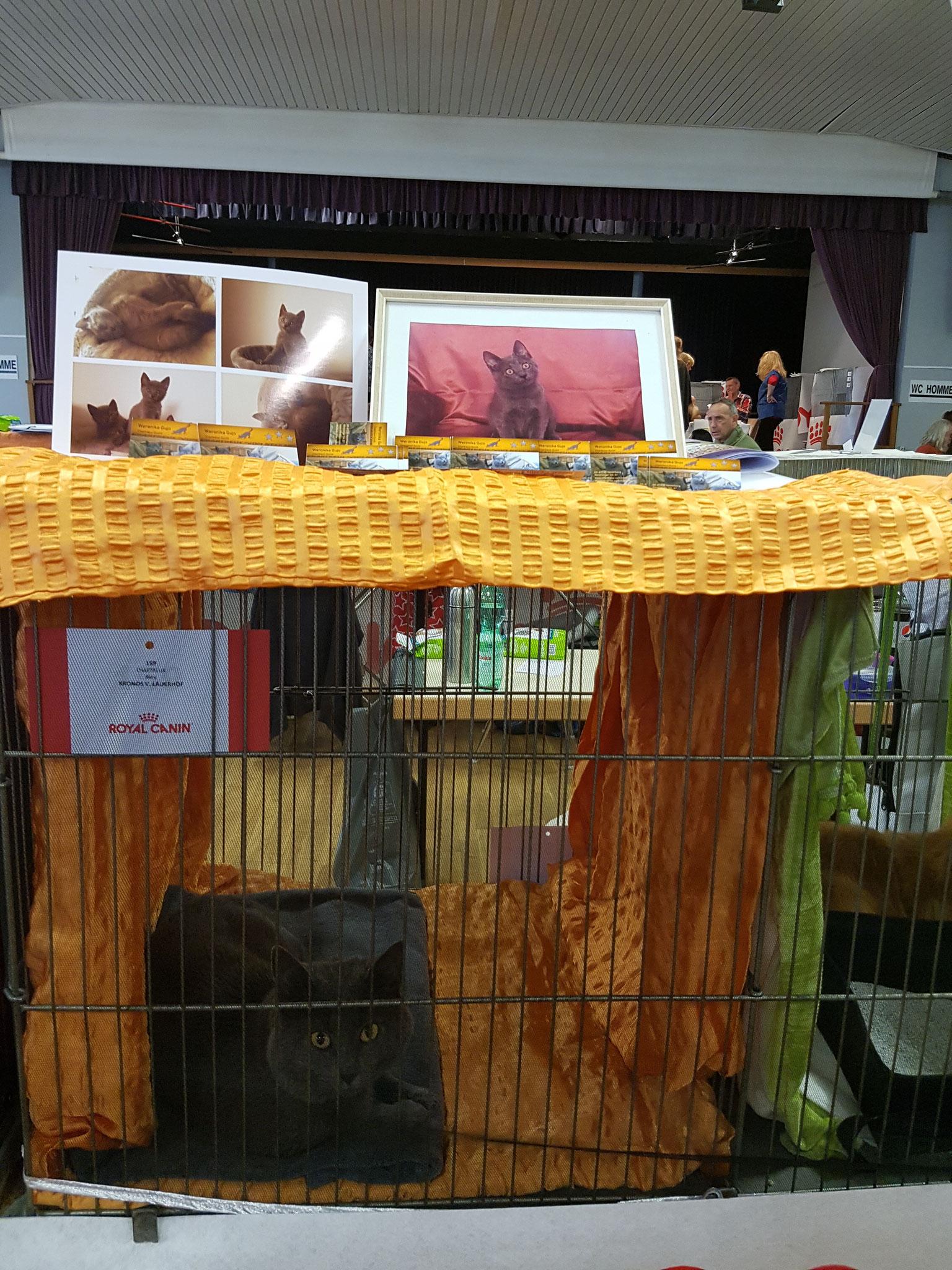 Kronos auf der internationalen Katzenausstellung in Frankreich