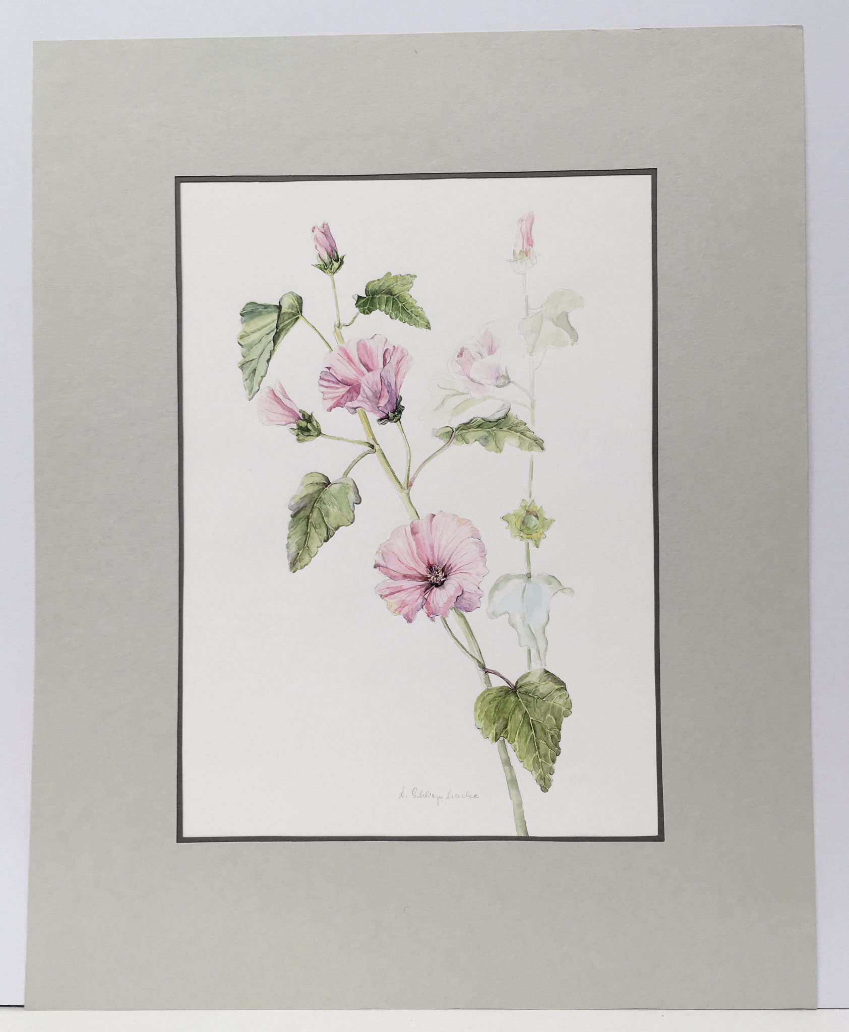 "Orig. Aquarell ""Bechermalve"" - 40 x 50 cm - 380,- €"