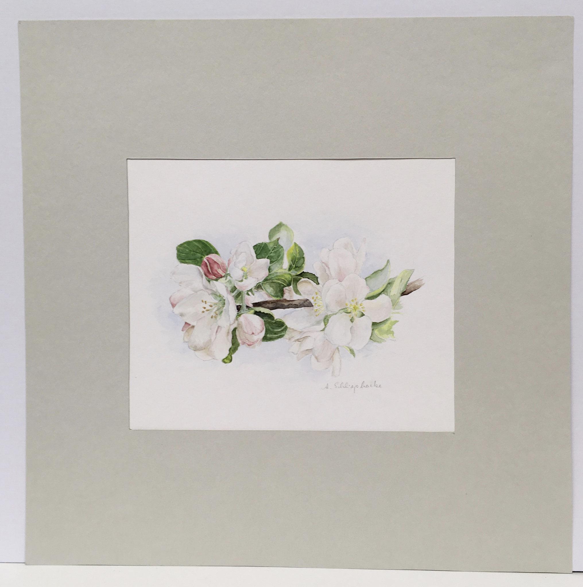 """Orig. Aquarell """"Apfelblüten"""" - 40 x 40 cm - 380,- €"""