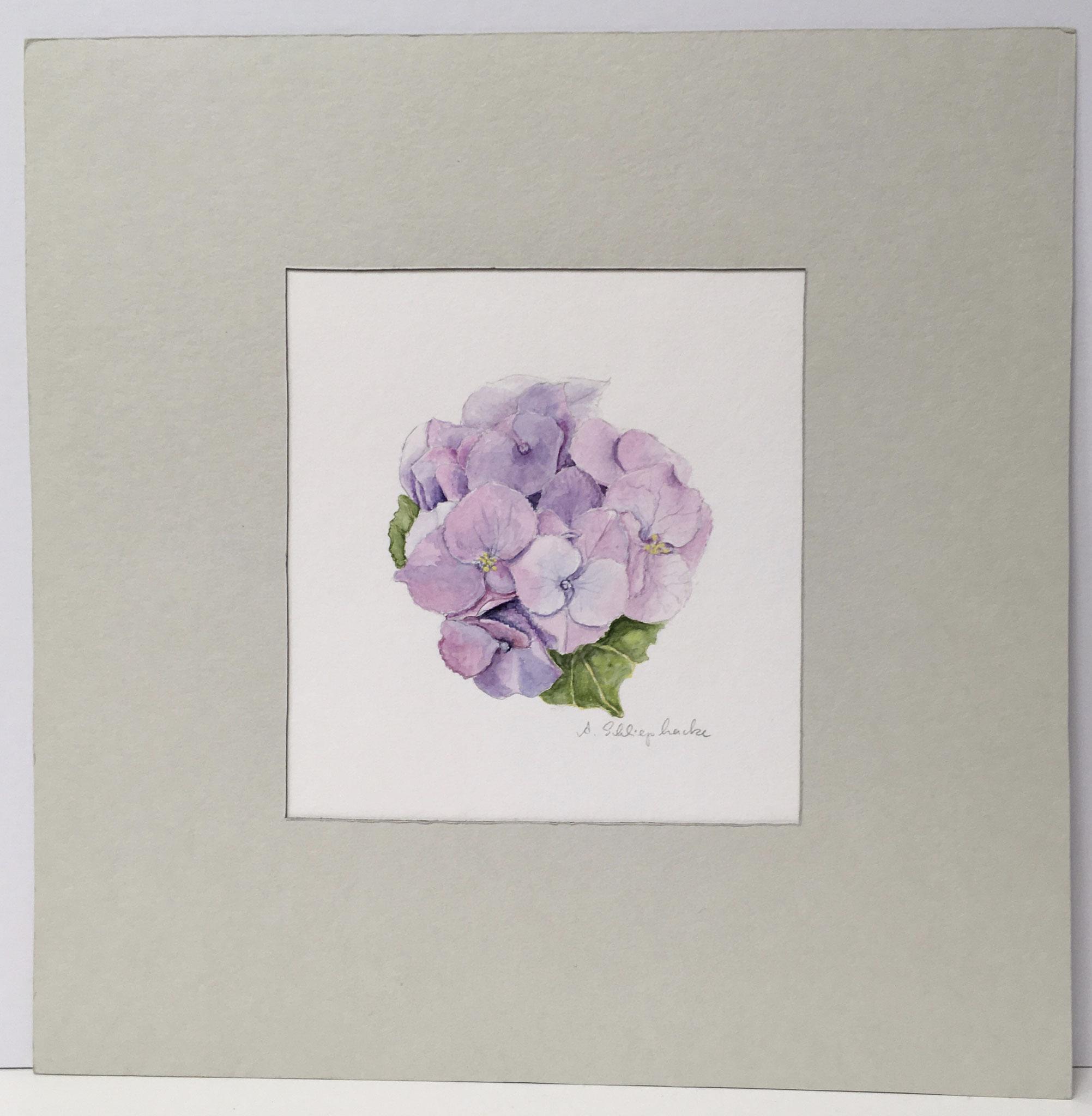 """Orig. Aquarell """"Hortensie I"""" - 30 x 30 cm - 310,- €"""