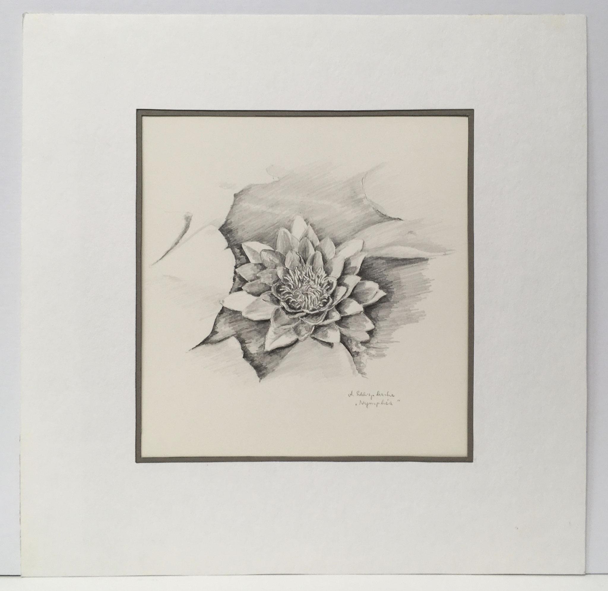"""Bleistiftzeichnung """"Nymphea"""" - 30 x 30 cm - 490,- €"""
