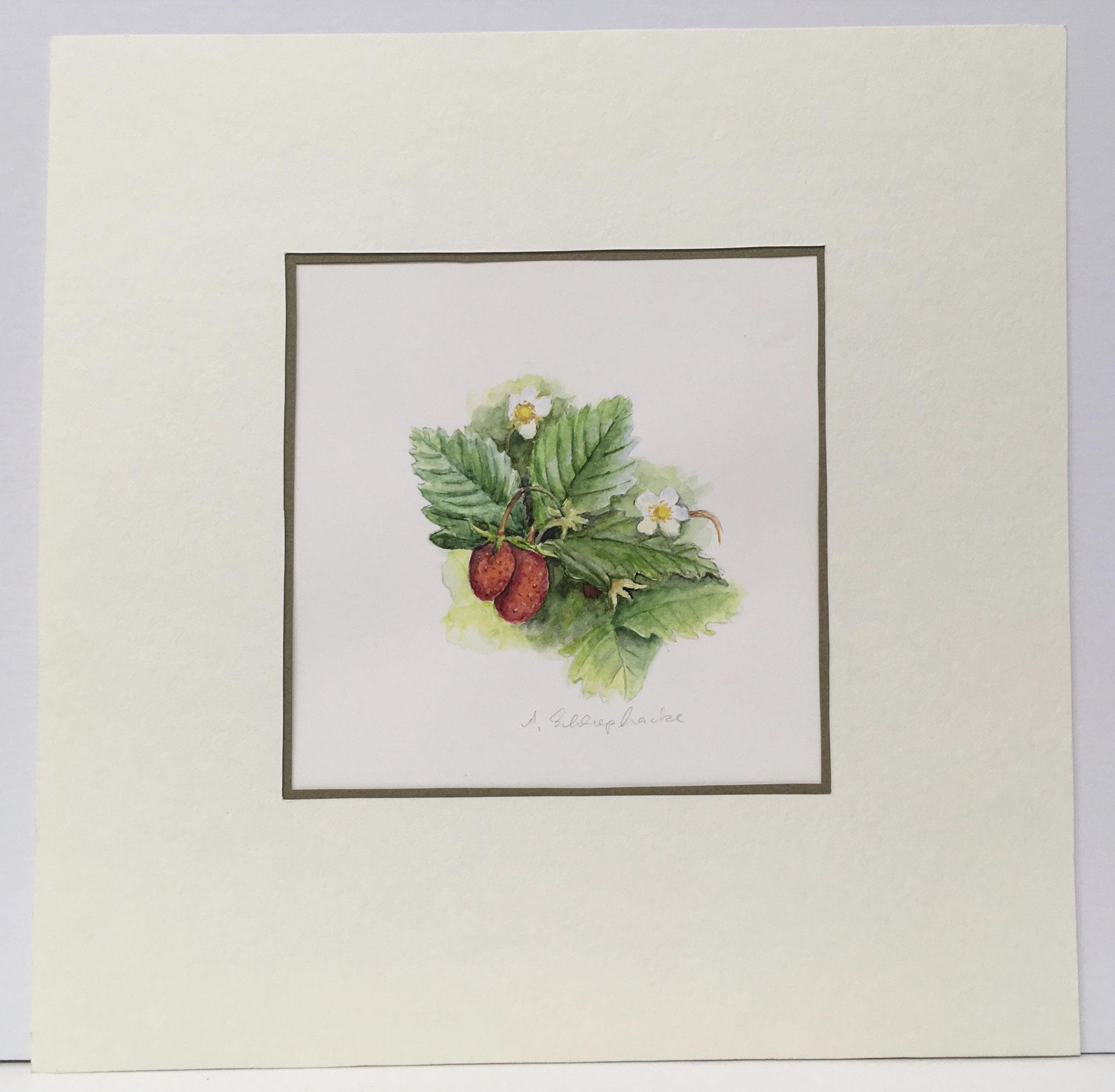 """Orig. Aquarell """"Erdbeeren"""" - 30 x 30 cm - 310,- €"""