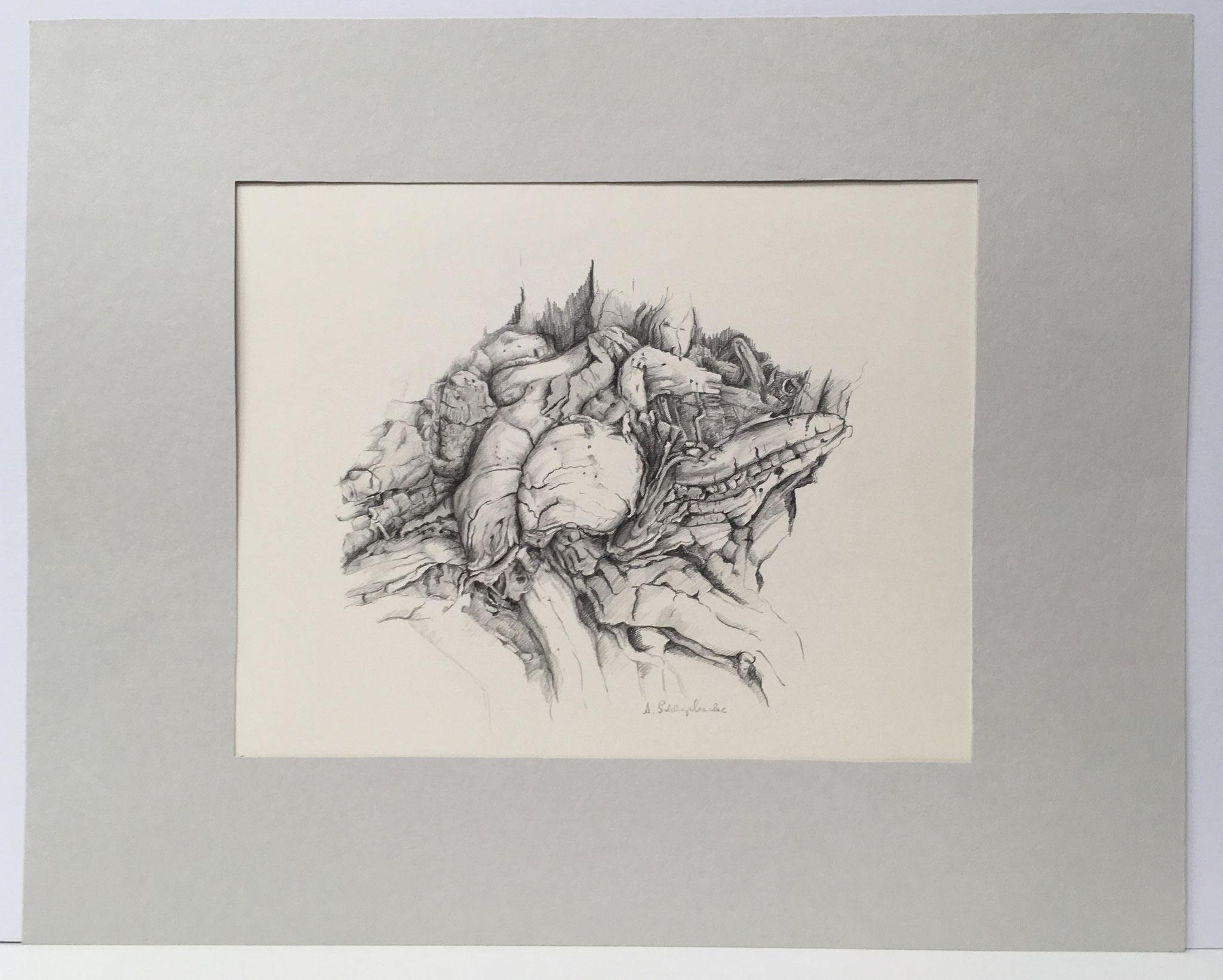 """Bleistiftzeichnung """"Alte Wurzel"""" - 50 x 40 cm - 490,- €"""
