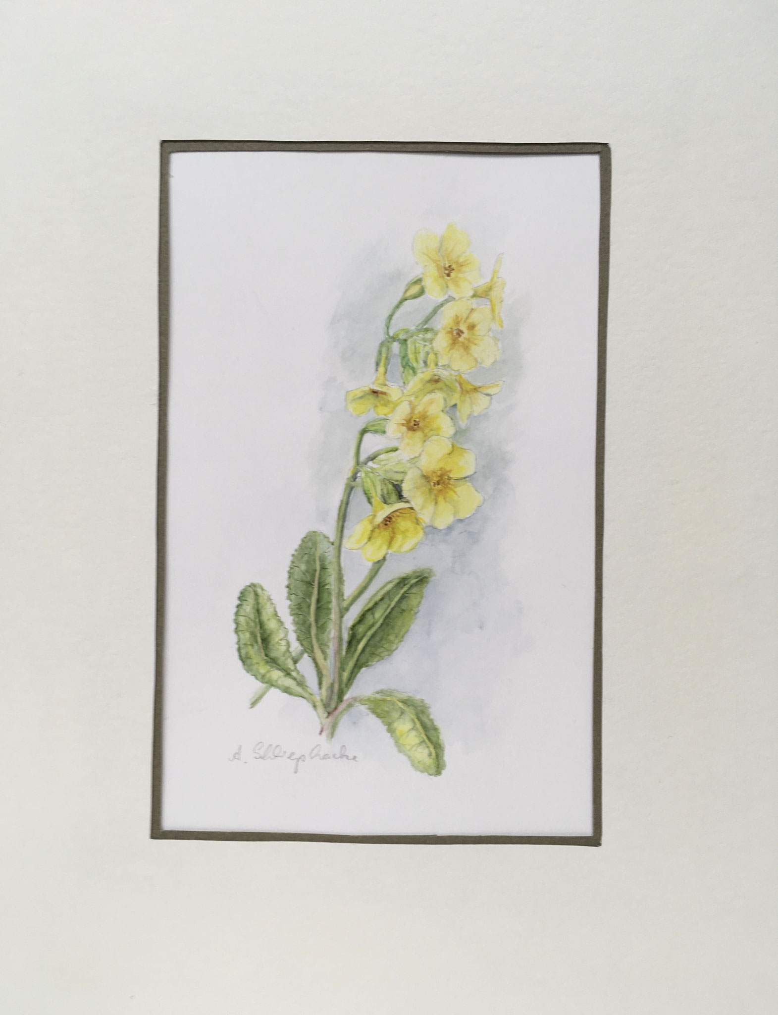 "Orig. Aquarell ""Gelbe Schlüsselblume"" - 30 x 30 cm - 310,- €"