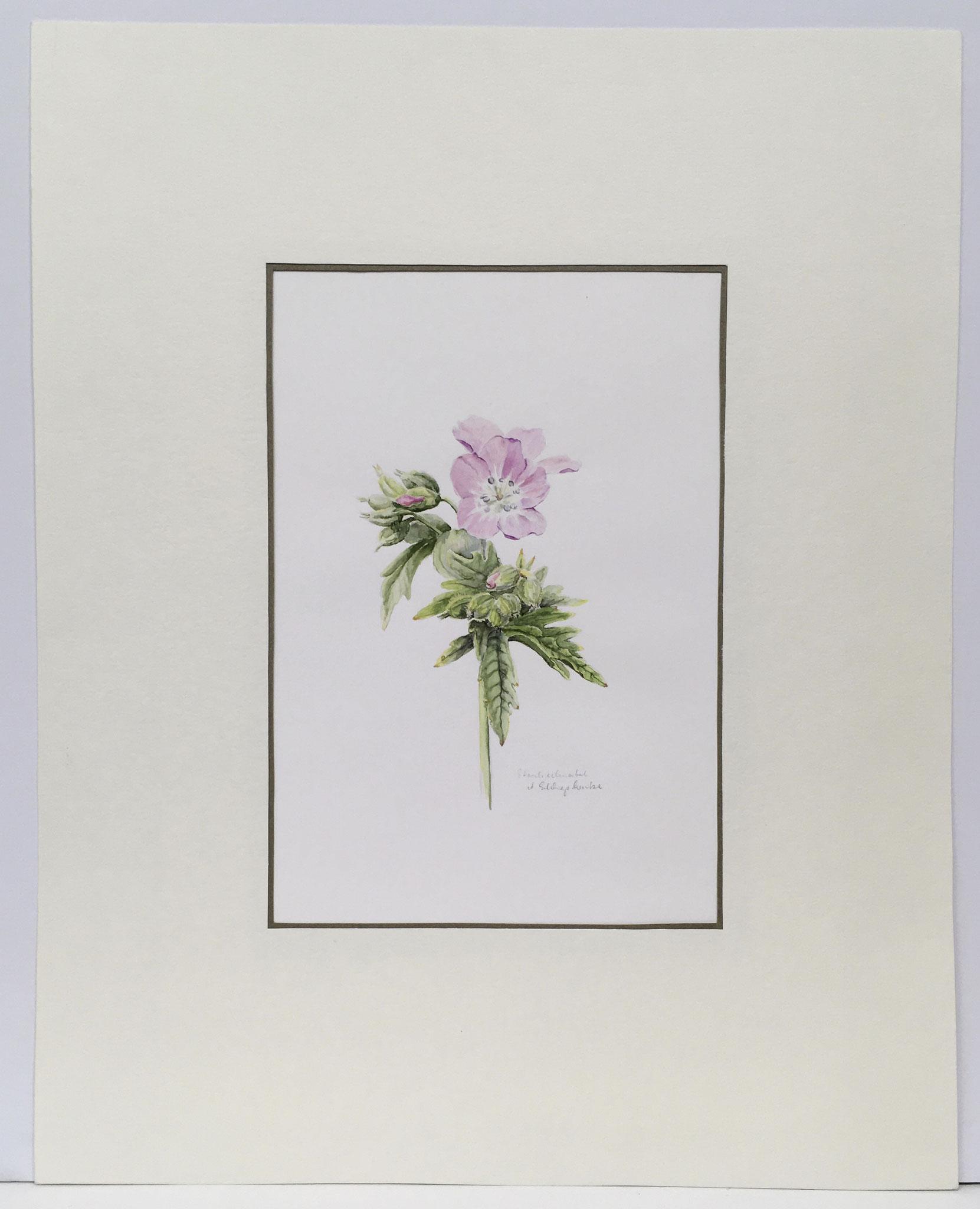 "Orig. Aquarell ""Waldstorchschnabel"" - 40 x 50 cm - 380,- €"