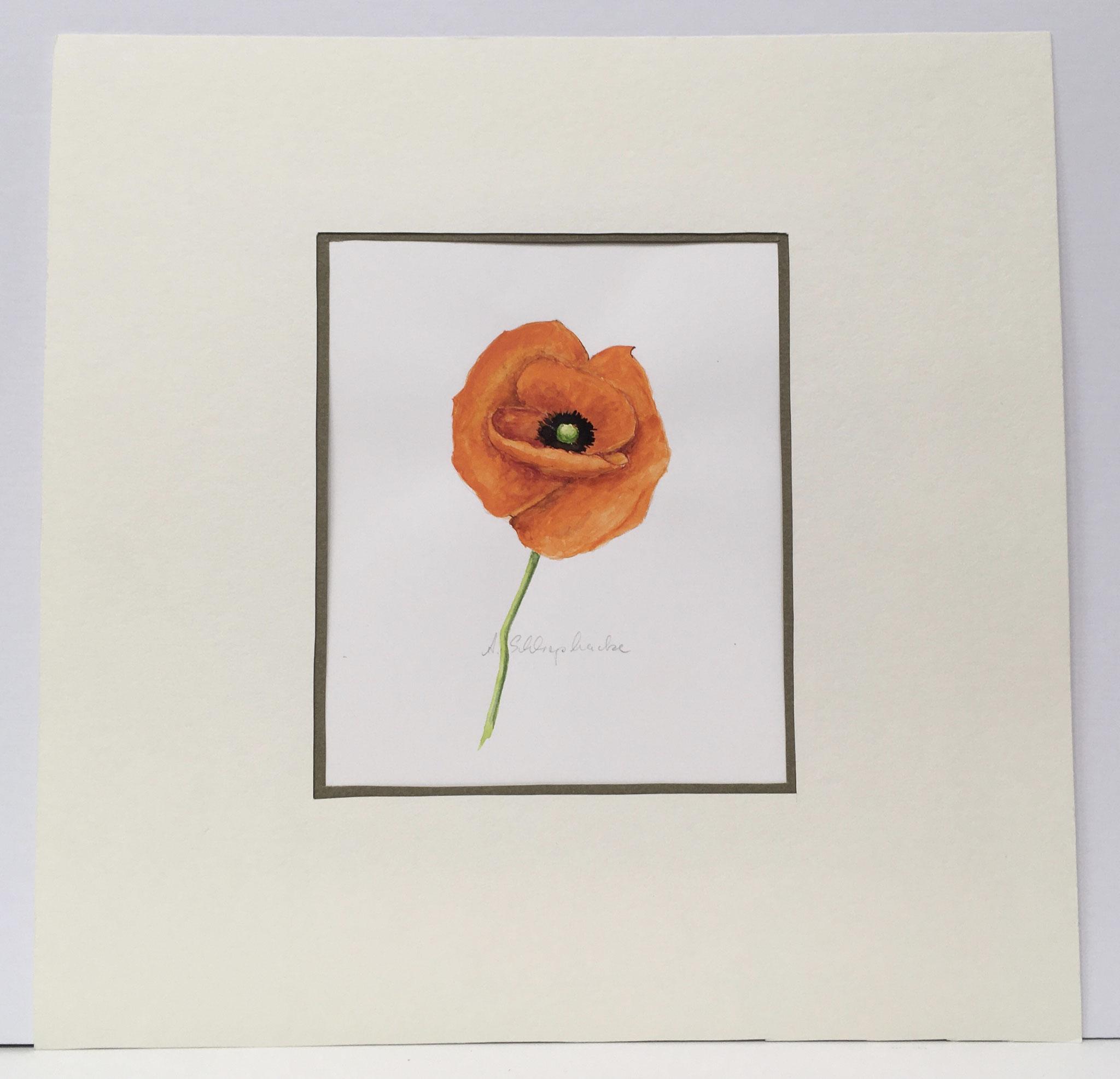 "Orig. Aquarell ""Mohnblüte"" - 30 x 30 cm - 310,- €"
