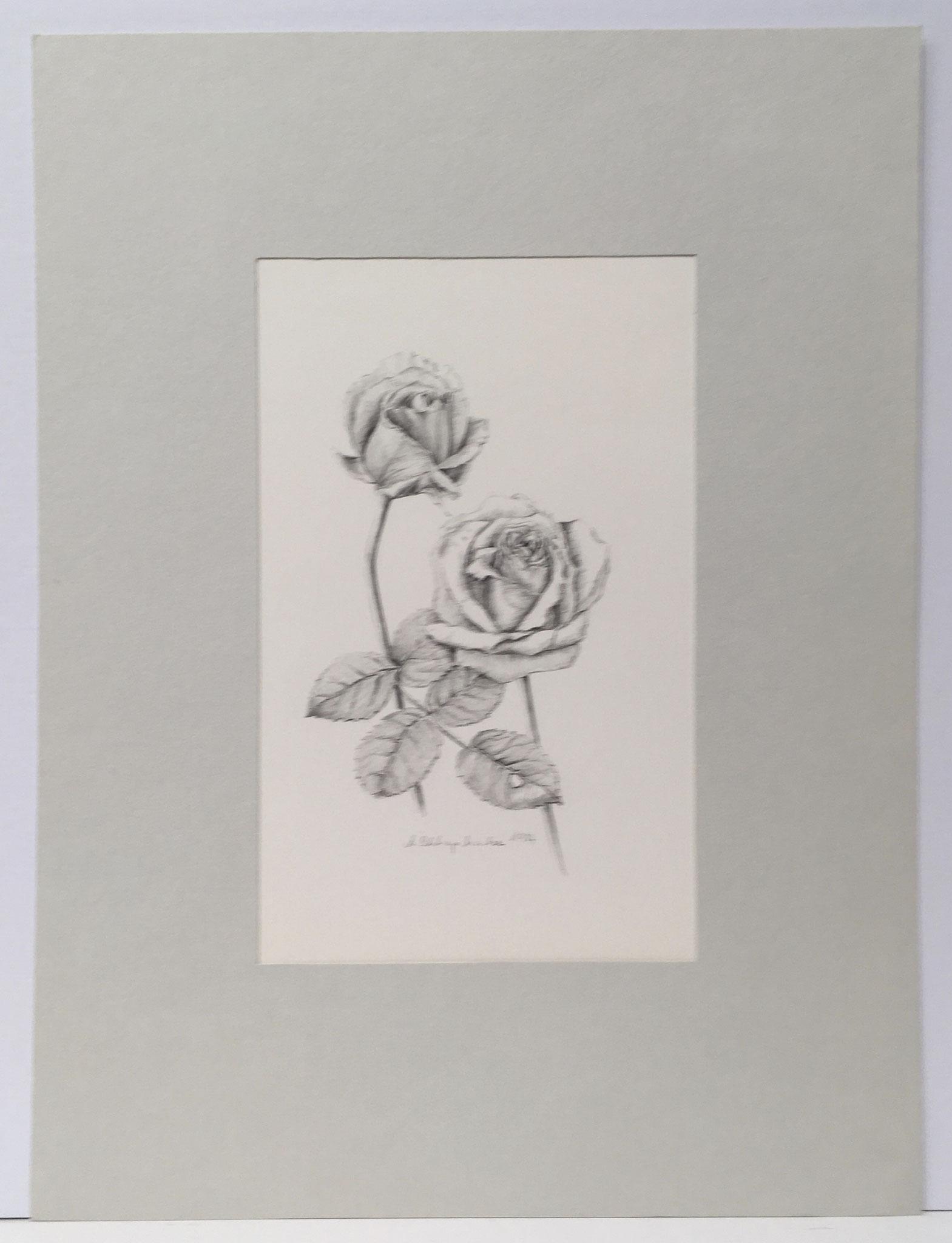 """Bleistiftzeichnung """"Rosen"""" - 30 x 40 cm - 390,- €"""
