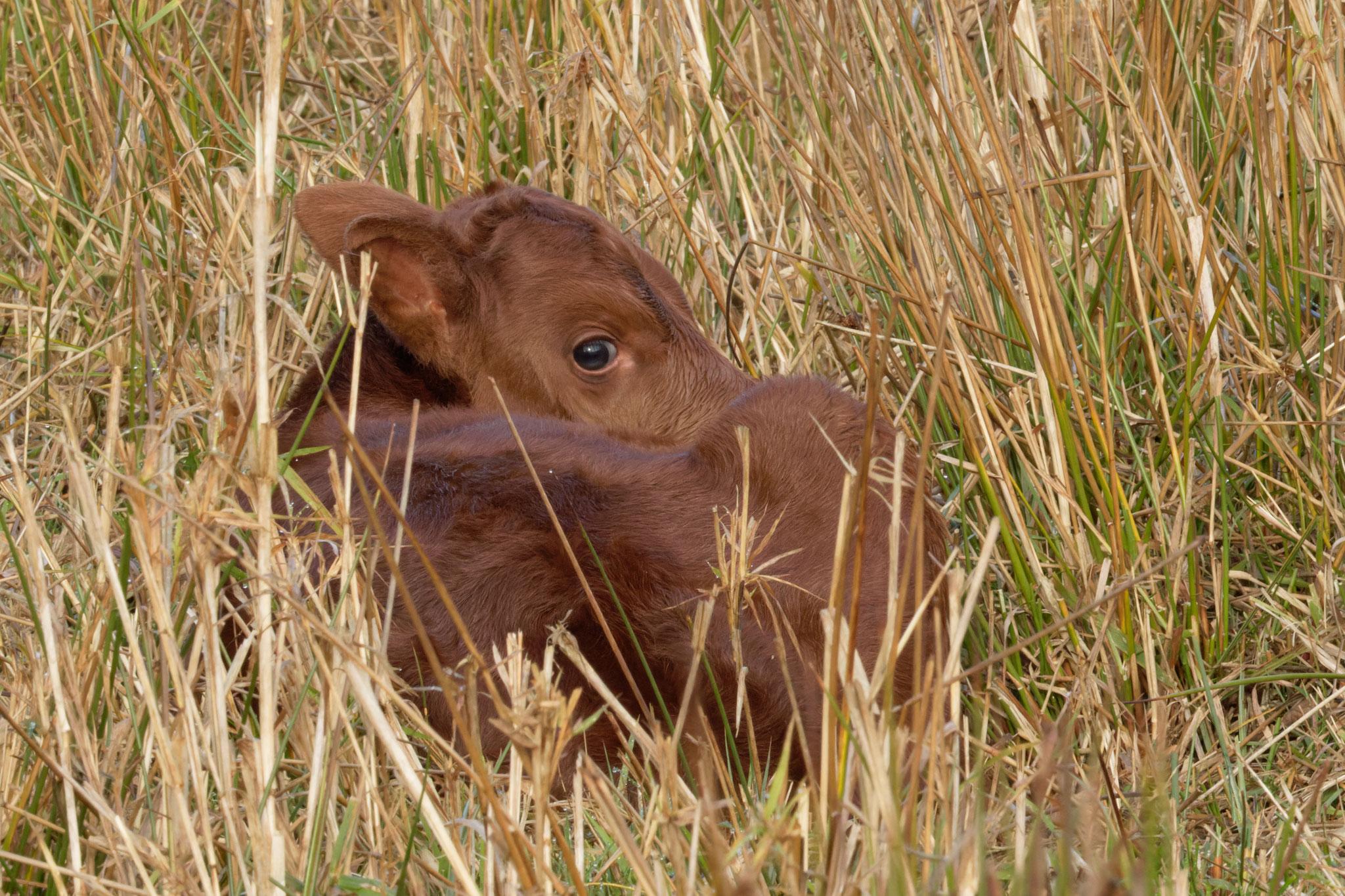 Wenn Anja sich ins Gras legt, um auszuruhen, ist sie nur noch schwer zu finden. (Foto: Stefan Leimbach)